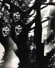 Martin Martincek - BÄUME aus dem ZYKLUS Der BERG - OriginalFotographie der TSCHECHISCHEN AVANGARDE 1978 - TREES kopen? Bied vanaf 85!