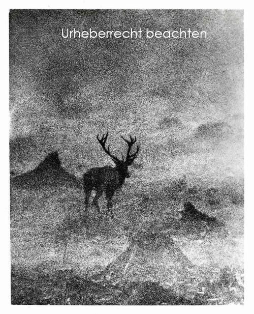 Slava Stochl - HIRSCH im MORGENNEBEL - Original Silbergelatine-Abzug des Fotographen der TSCHECHISCHEN AVANGARDE kopen? Bied vanaf 75!
