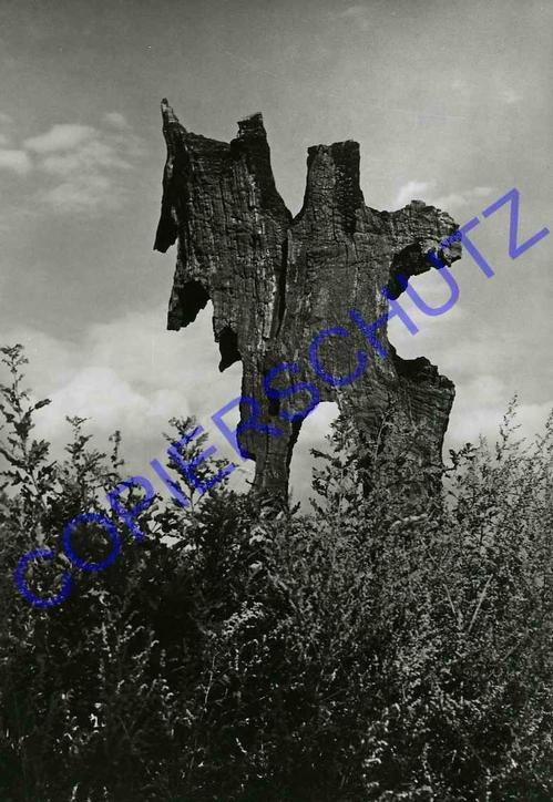 Josef Ehm - I WAS A TREE 1969 OriginalFotographie des Fotographen der TSCHECHISCHEN AVANGARDE - J´ÉTAIS un kopen? Bied vanaf 120!