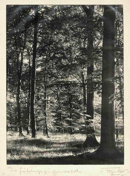 Hermann Fischer - Im FRÜHLINGS BIRKENWALD - Handsignierte OriginalFotographie des VATERS der TIERFOTOGRAPHIE kopen? Bied vanaf 150!