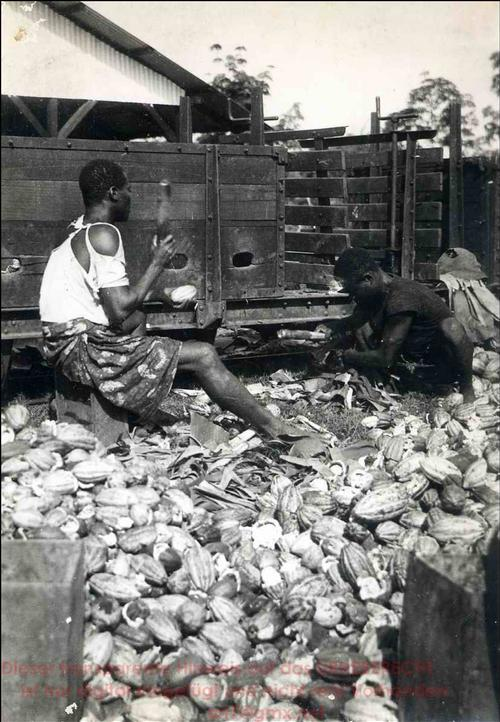 Paul Lieberenz - KAKAO-ERNTE in KAMERUN - 2 OriginalFotographie des BERLINer Sven HEDIN-Fotographen -VINTAGEs um 1934 kopen? Bied vanaf 120!