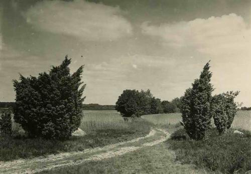 Paul W. John - LÜNEBURGER HEIDE - Handabzug des berühmten 30gerJahre-Fotografen kopen? Bied vanaf 25!