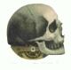 Friedrich Meckseper - Medizin (Schädel) signiert ea kopen? Bied vanaf 195!
