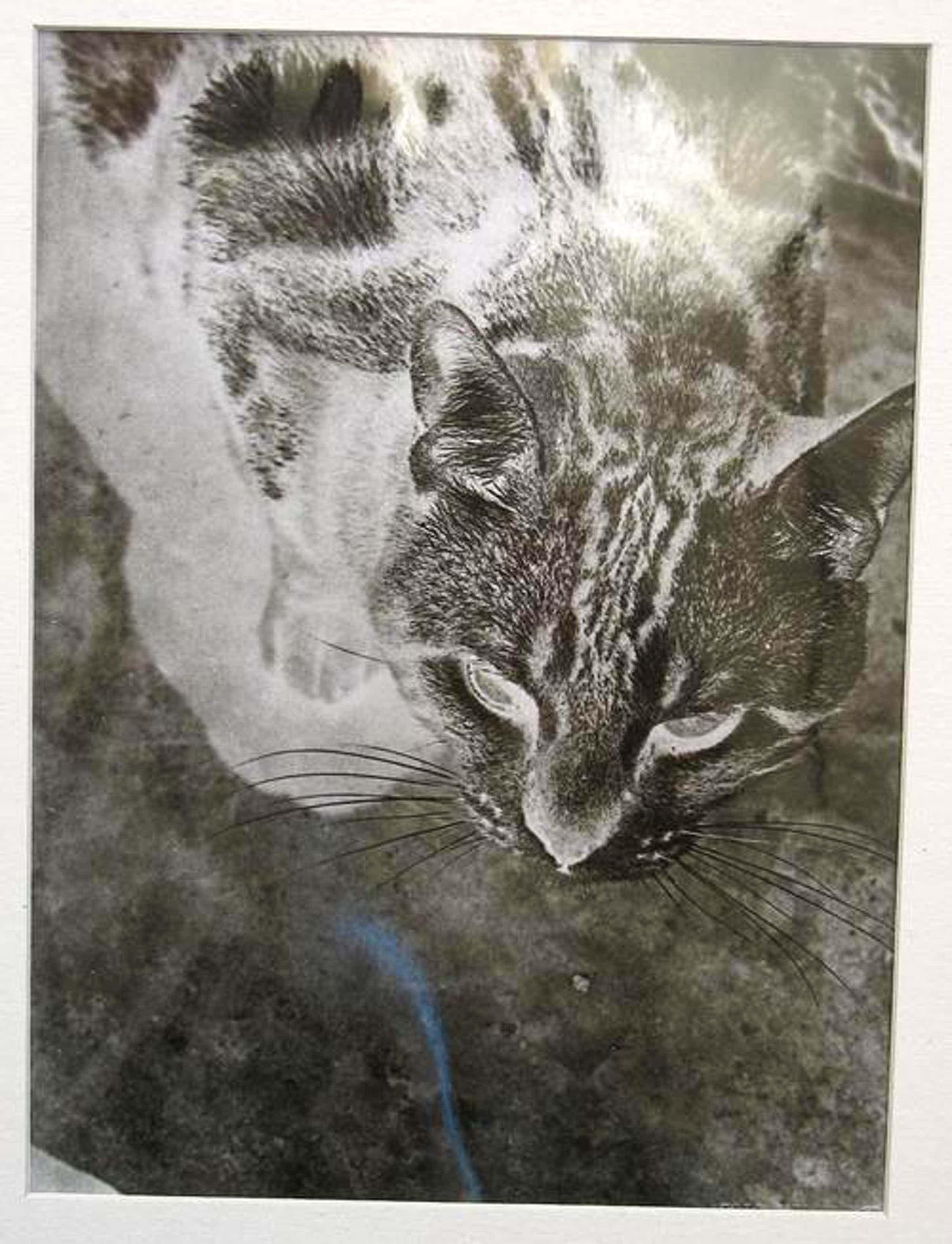 Laszlo Moholy-Nagy - Katze, 1973, mit Blindprägung kopen? Bied vanaf 1200!