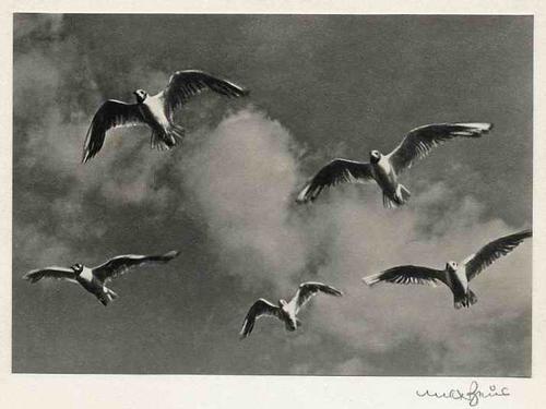 Max Baur - RÜGEN - MÖVEN - handsignierte OriginalFotographie - Photographische MODERNE - IN THE BAUHAUS SPIRIT kopen? Bied vanaf 52!