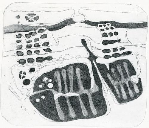 Willibrord Haas - Schwimmkolonie, Offsetlithografie, 1979 kopen? Bied vanaf 28!