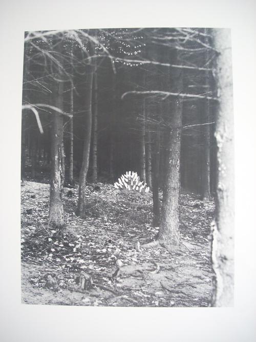 Lothar Baumgarten - Serie von 3 Blatt Original-Offsetdrucken von 1978, 1 Blatt verso monogramiert kopen? Bied vanaf 175!