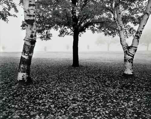 Douglas Busch - SINNISSIPPI PARK ROCKFORD - Signierte CONTINUOUS TONE COLLOTYPE vom 20 x 50 cm OriginalNegativ 1983 kopen? Bied vanaf 420!