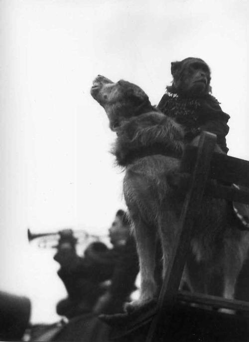 Tibor Honty - TROMPETE - 1965 - OriginalBromsilberFotographie der TSCHECHISCHEn MODERNE) La TROMPETTE 1965 kopen? Bied vanaf 140!