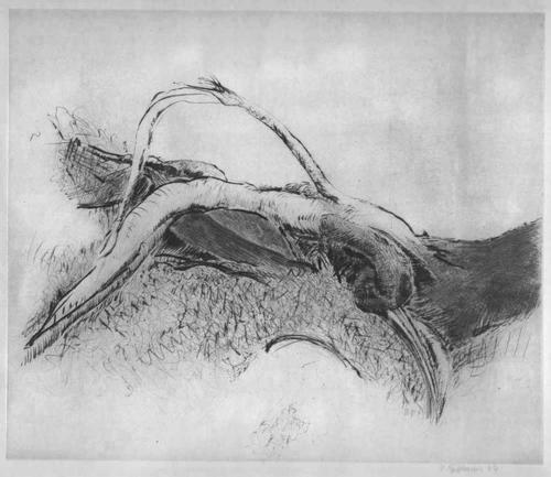 Peter Fetthauer - WURZELN - Handsignierte OriginalRadierung des Malers & BILDHAUERS aus HAMBURG (genannt PEFE) 1974 kopen? Bied vanaf 65!
