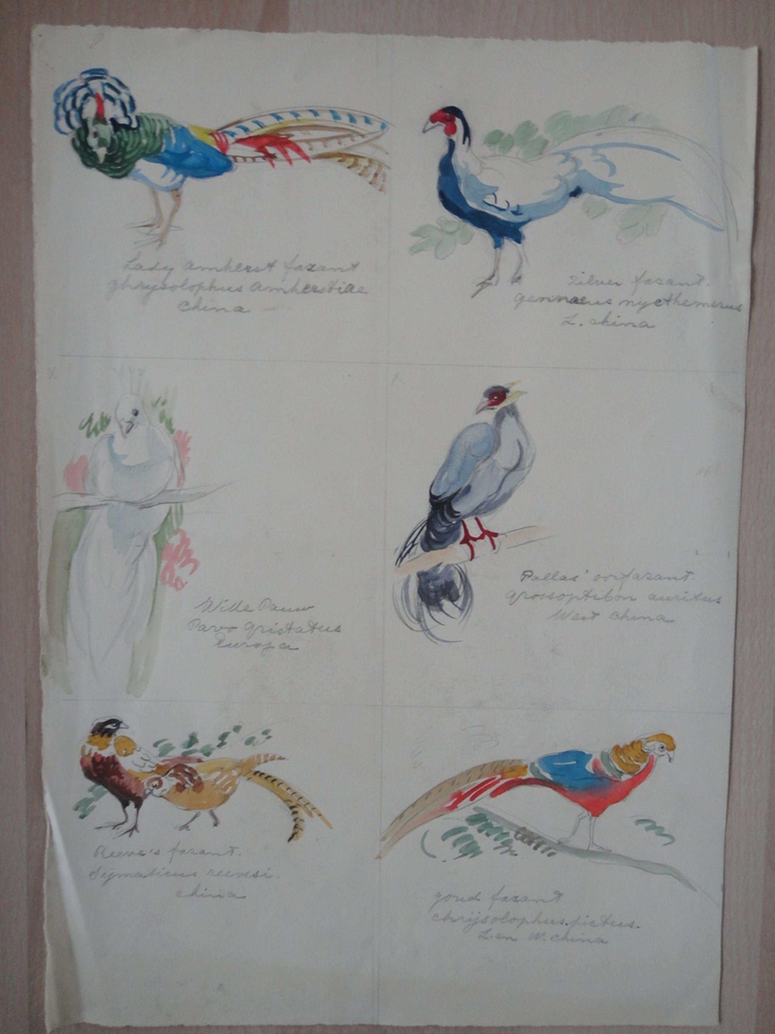Tini van Doornik (1906-1980), aquarel, 6 schetsen van vogels kopen? Bied vanaf 1!