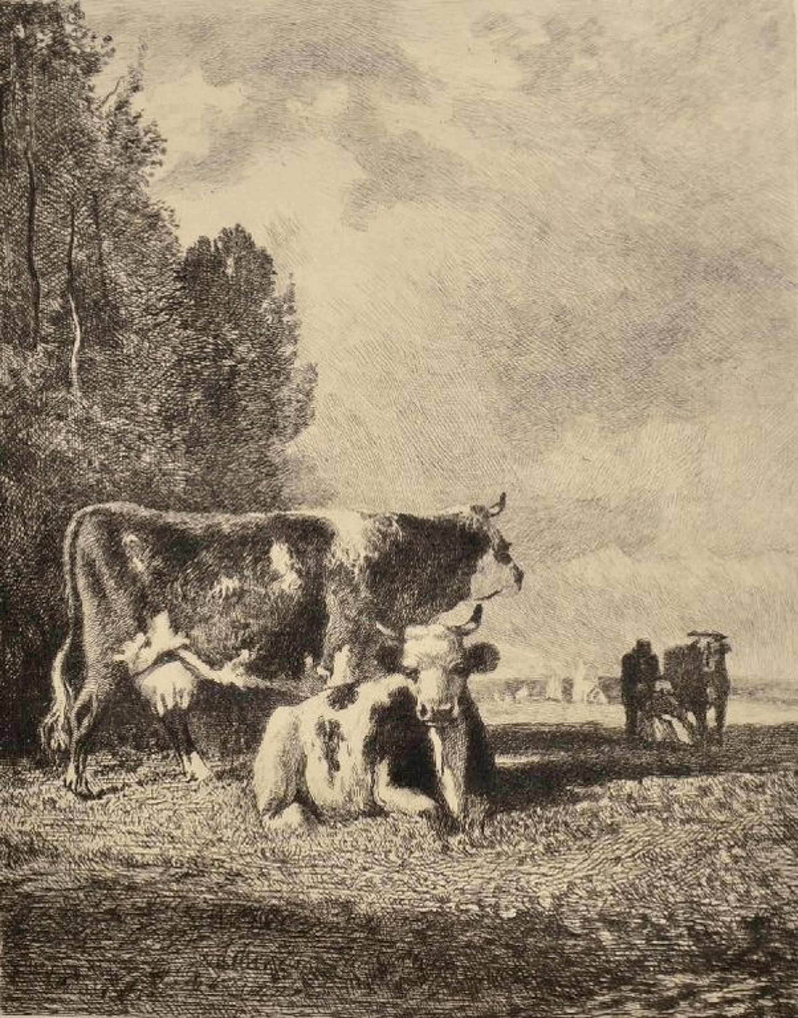Ets koeien in een weide kopen? Bied vanaf 1!