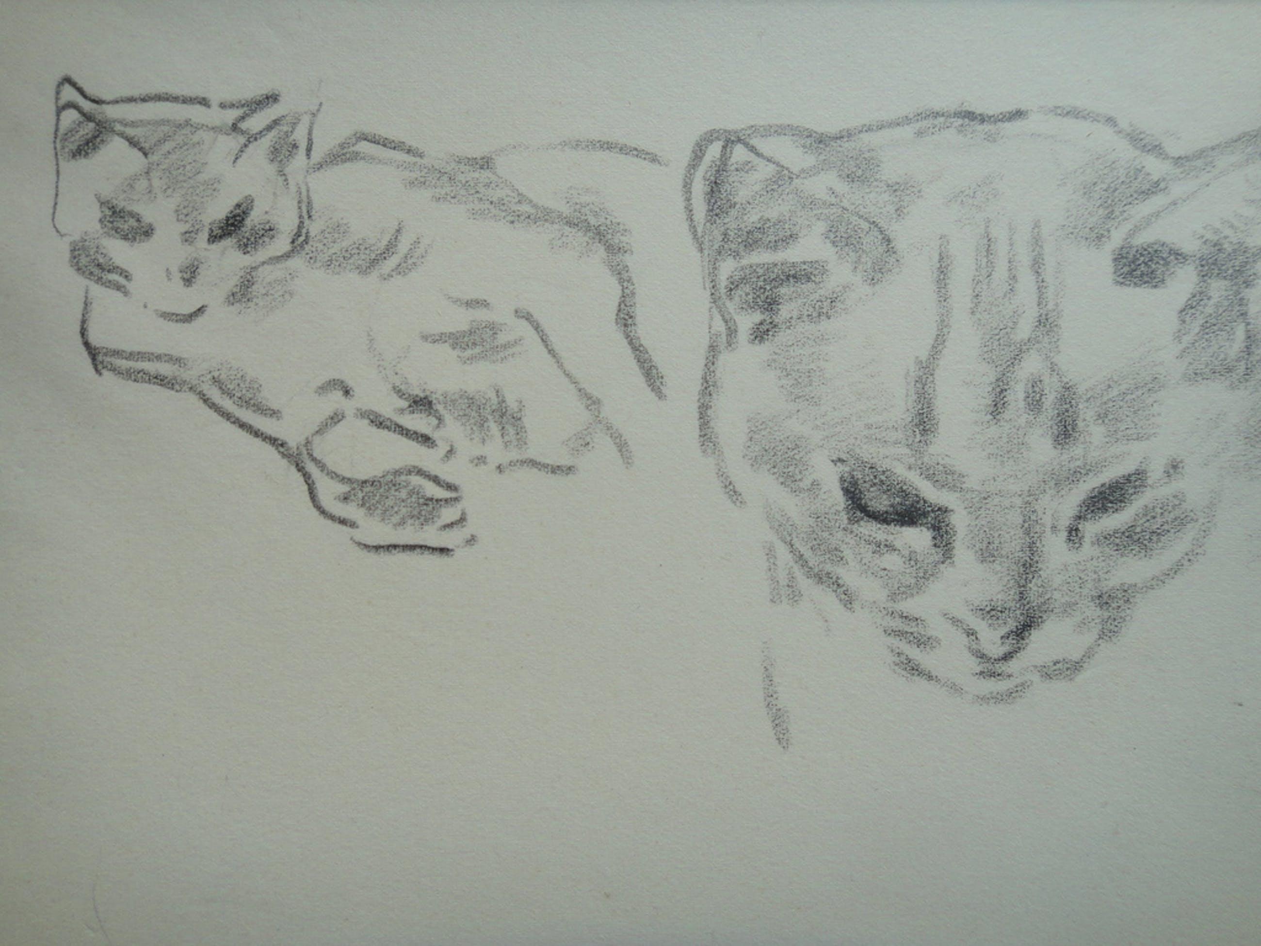 Johan Laurent ter Veer (1895-1970) , tekening, kattenkopjes kopen? Bied vanaf 25!