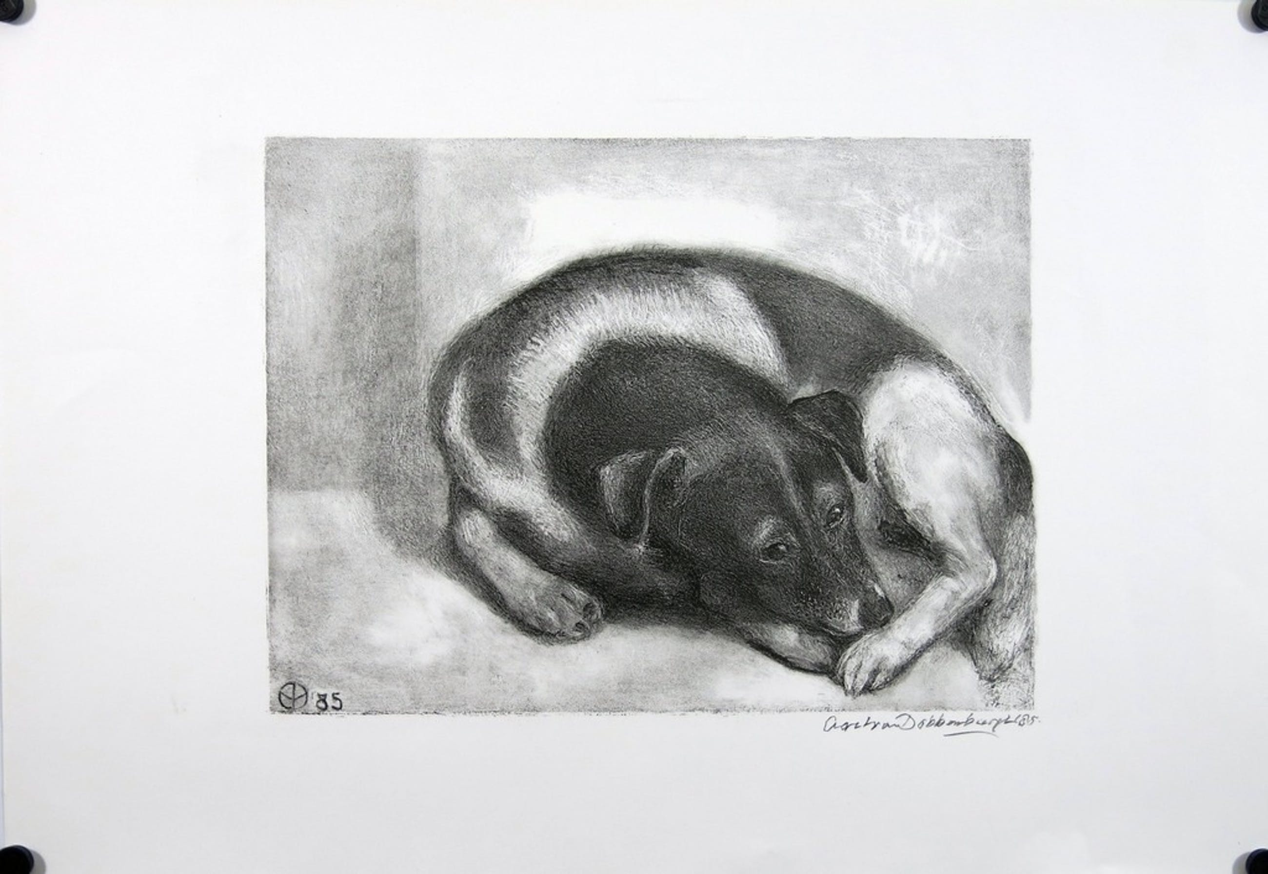 Aart van Dobbenburgh: Litho, Hond kopen? Bied vanaf 1!