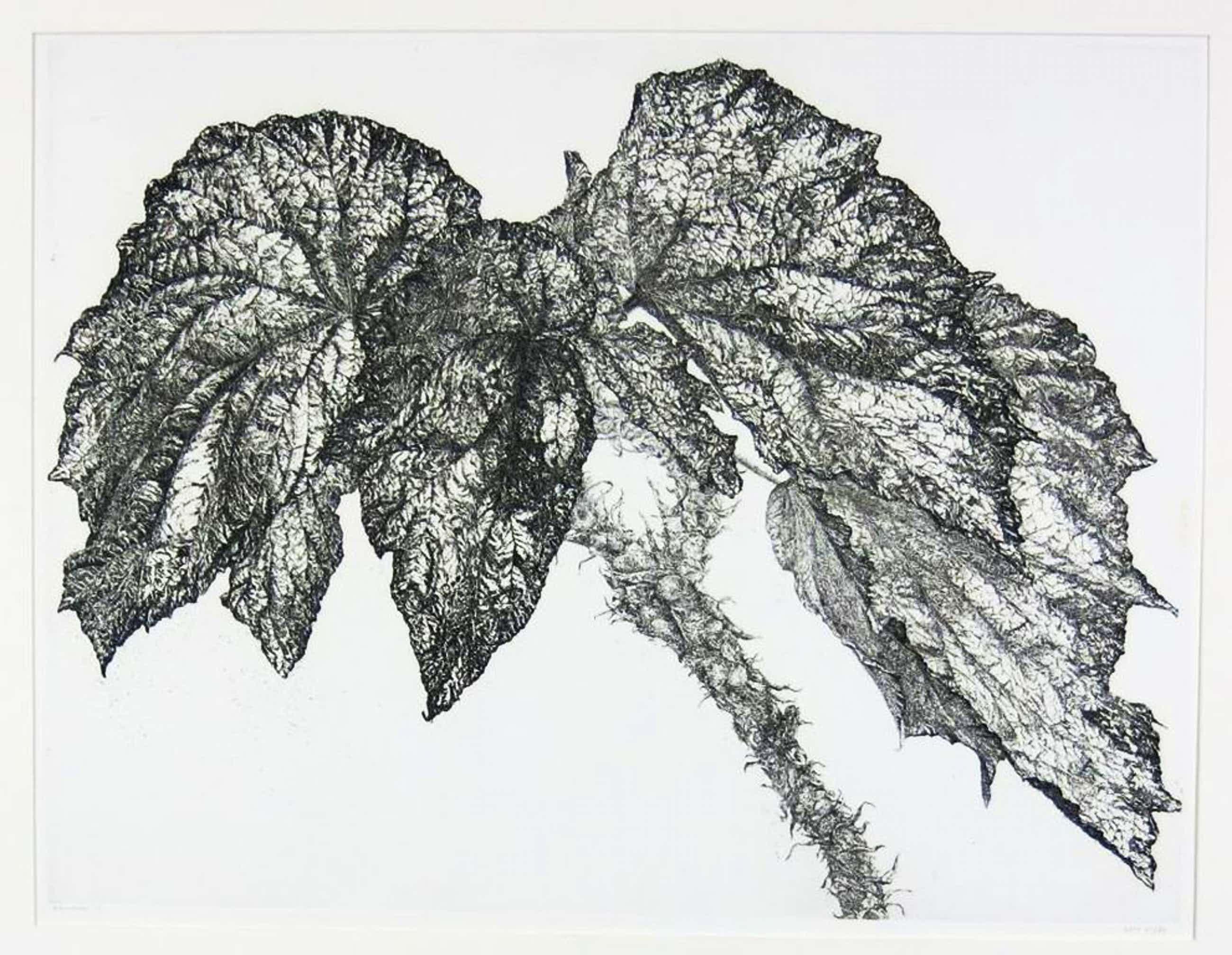 Reinder Homan: Ets, Begonia kopen? Bied vanaf 55!