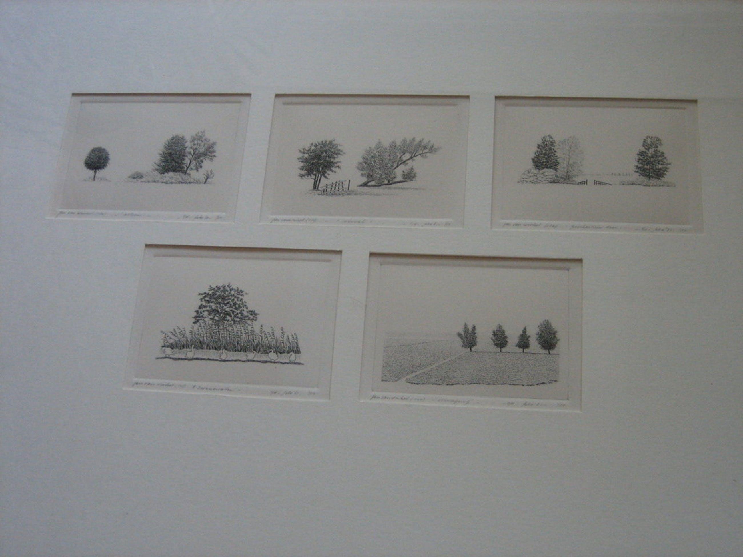 5 miniatuur etsen - natuur afbeeldingen in paspartou -  in lijst kopen? Bied vanaf 75!