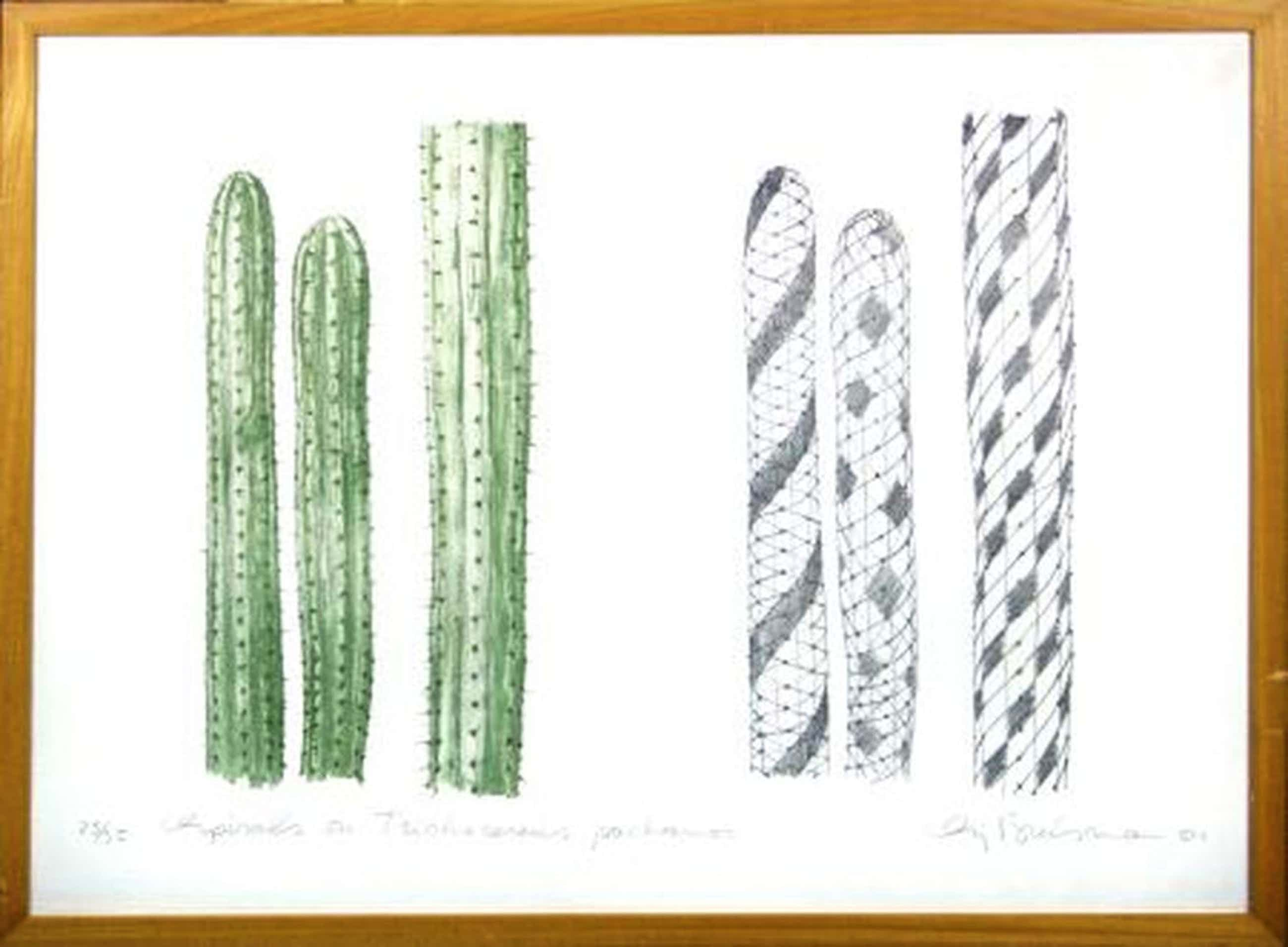 Sjoerd Buisman, Spirals on Trichocereus pachanoi, '81, grote ingelijste litho kopen? Bied vanaf 240!