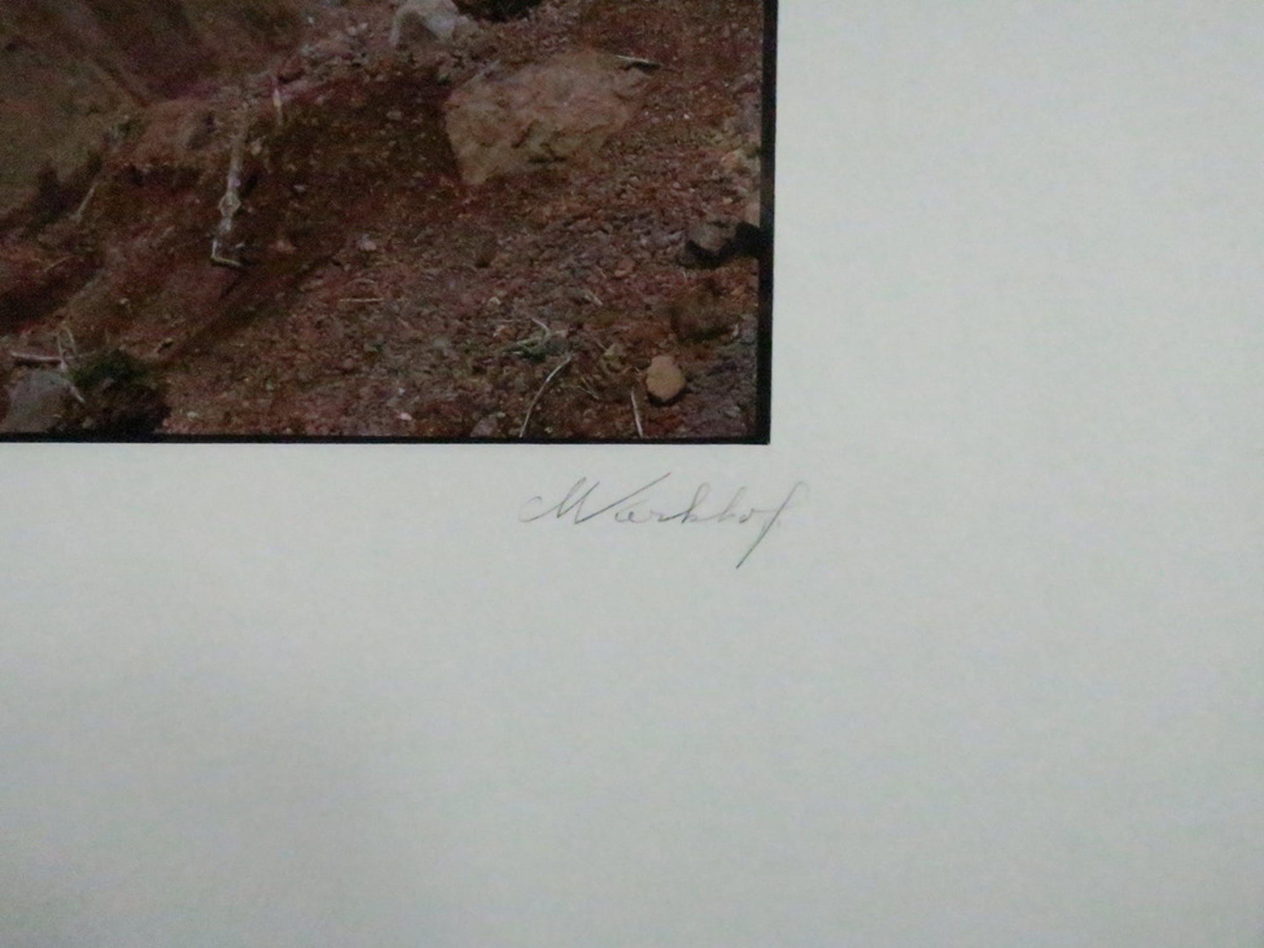 Martien Kerkhof: Foto, Toscane II - Ingelijst kopen? Bied vanaf 1!