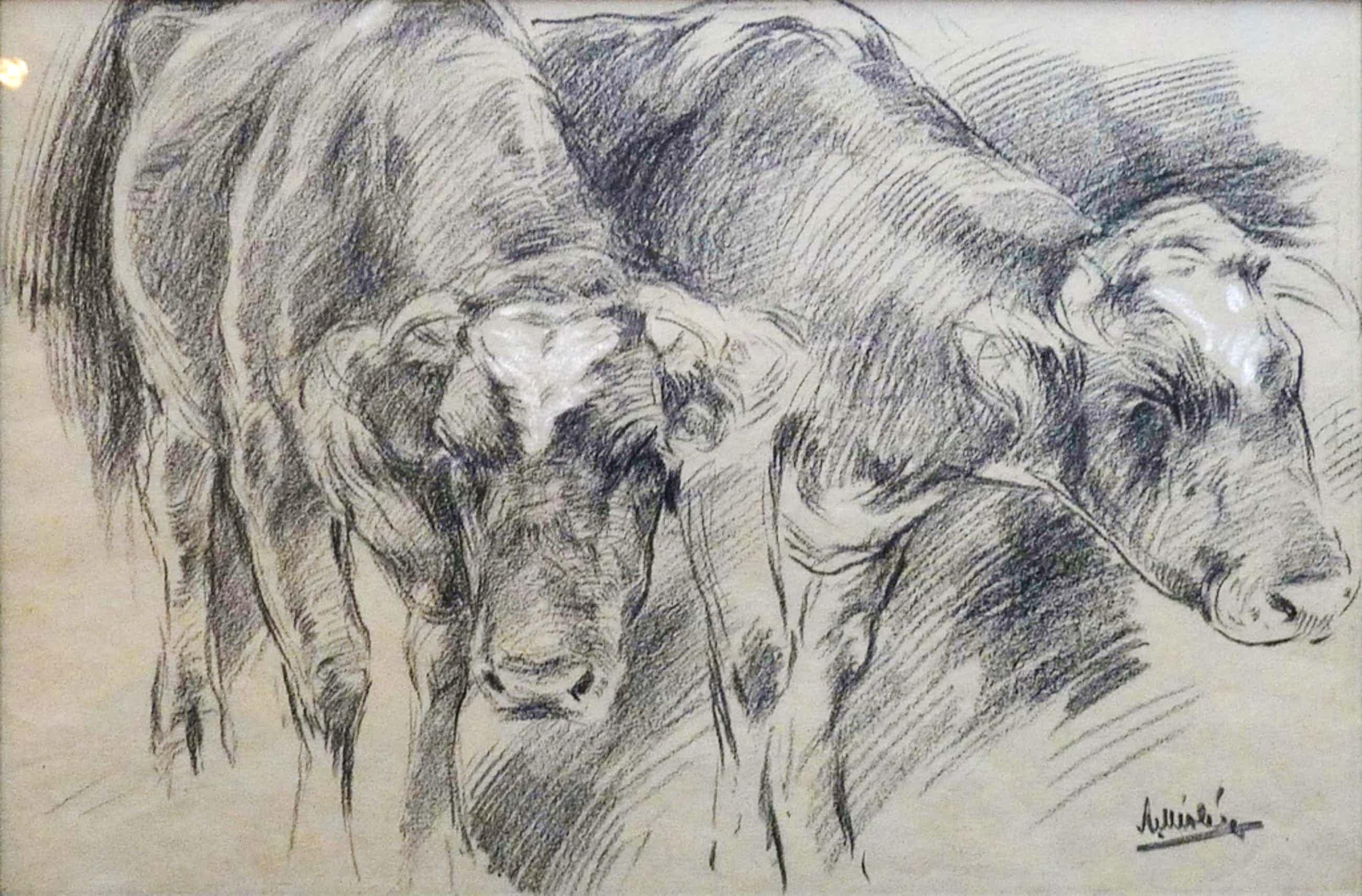 A. Miolée, Tekening, 2 koeien, Gesigneerd kopen? Bied vanaf 70!