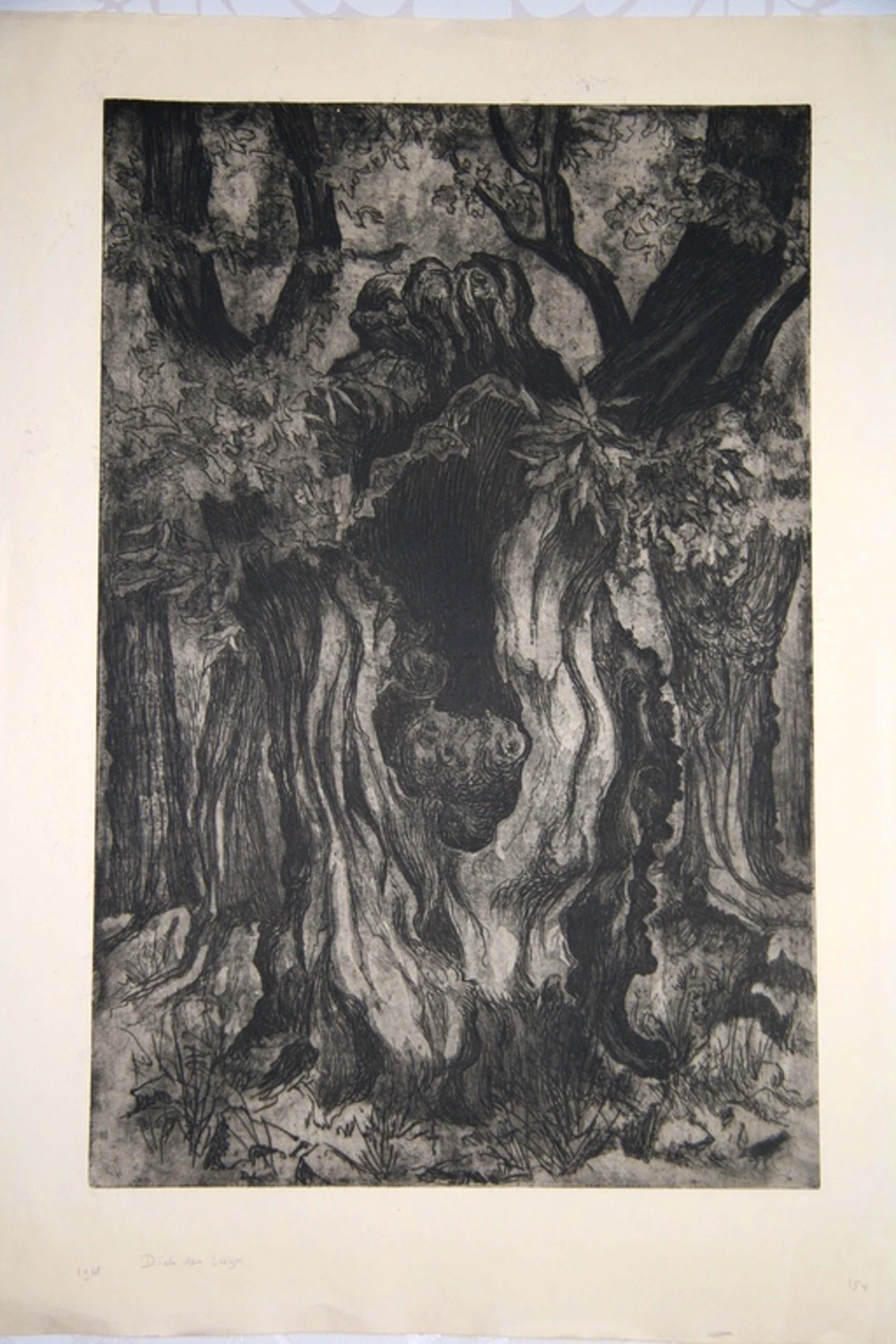 Dick van Luijn, ets, Oude Afrikaanse Kastanjebomen kopen? Bied vanaf 40!