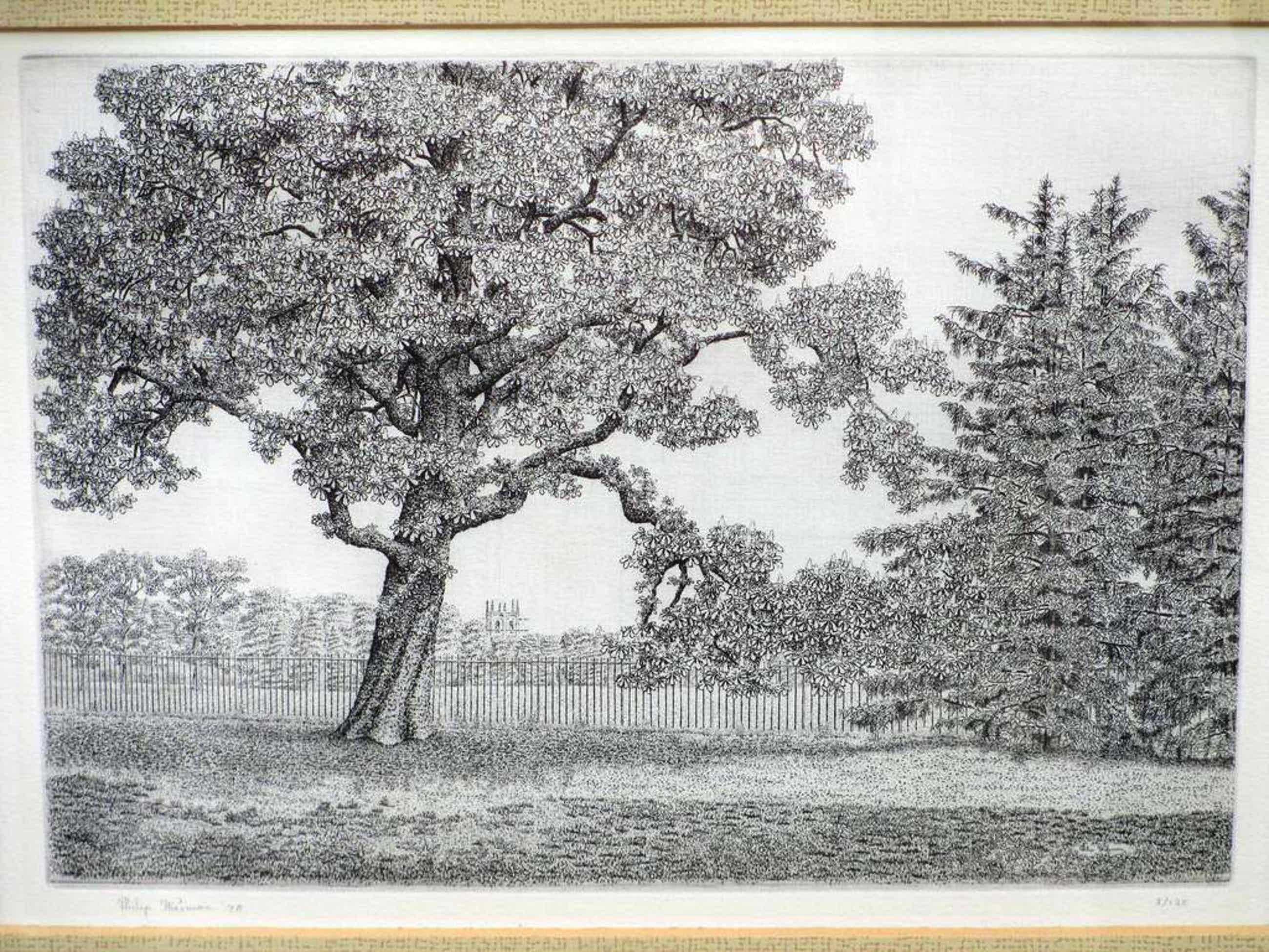 Philip Wiesman, Kastanjeboom in Engels landschap, Ets kopen? Bied vanaf 40!
