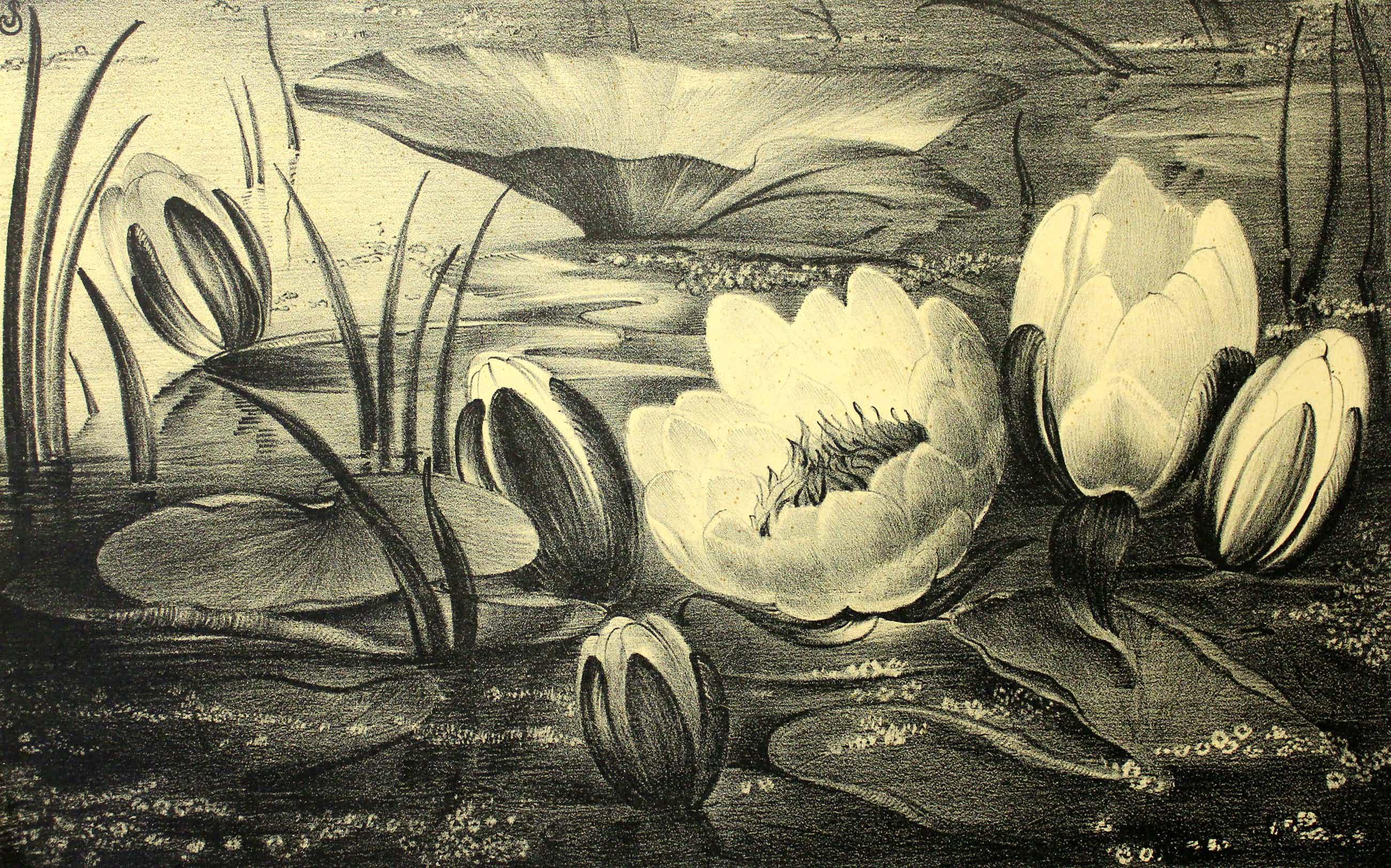 Jan Schonk - Z.t. (Waterlelies) - Tweede versie kopen? Bied vanaf 65!