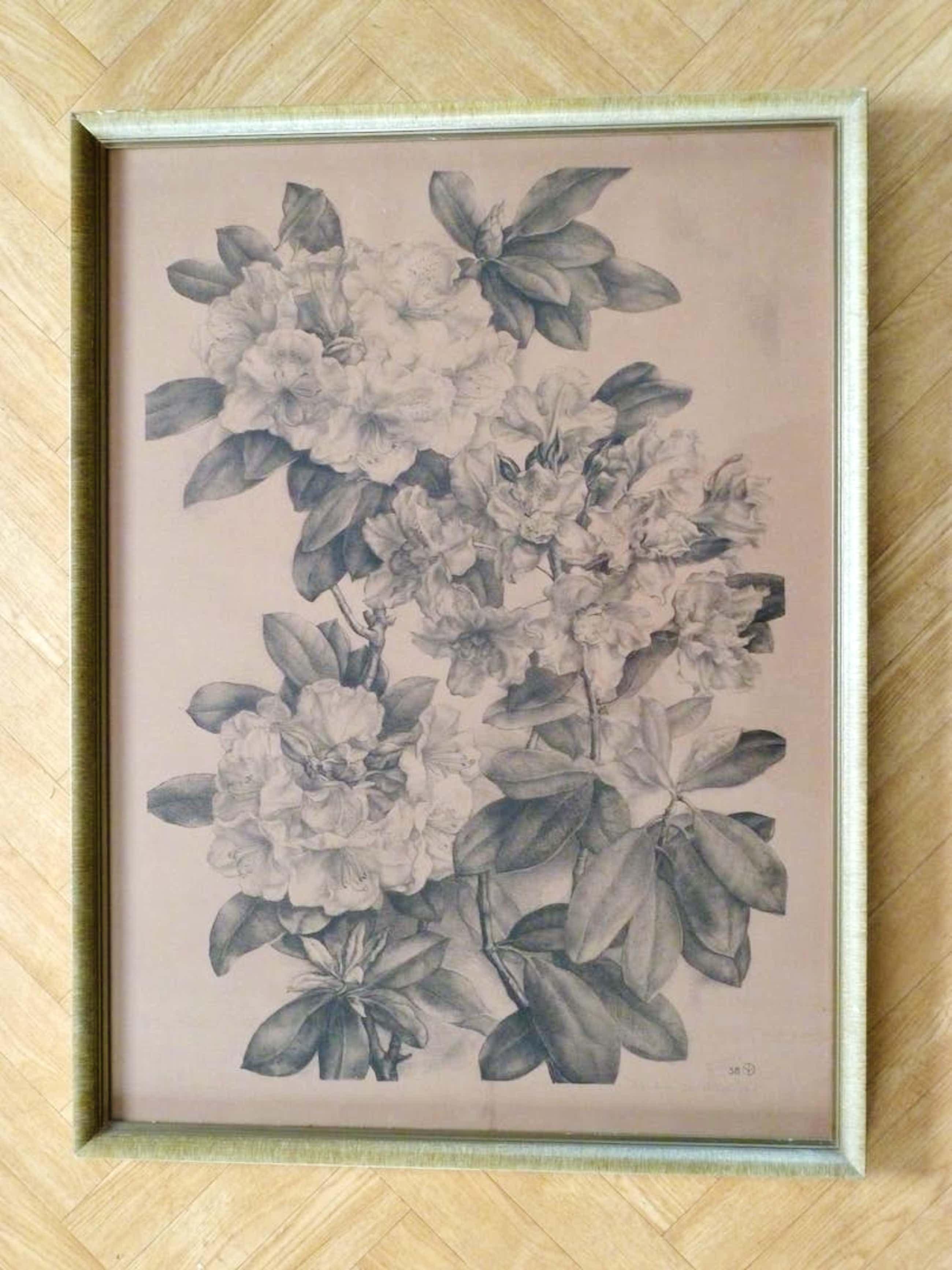 Aart van Dobbenburgh - Rhododendron kopen? Bied vanaf 40!