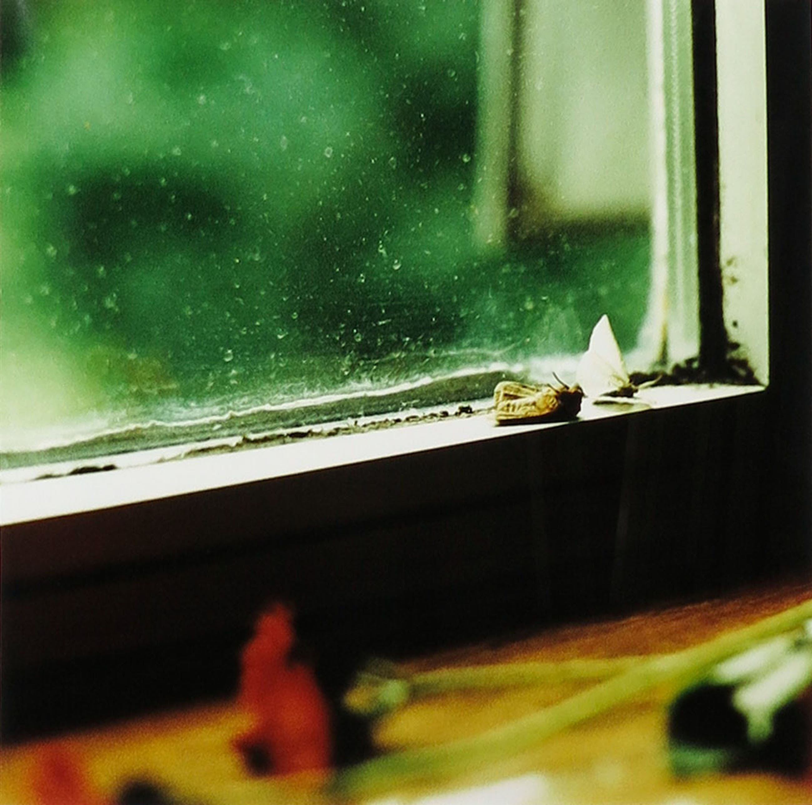 Brigitte de Langen - Foto, Square moths - Ingelijst kopen? Bied vanaf 10!