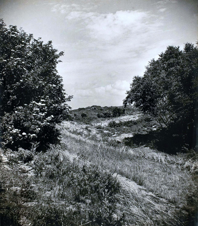 Cas Oorthuys - Duinen Noord Holland - originele foto op bariet-fotopapier - 21471 kopen? Bied vanaf 60!