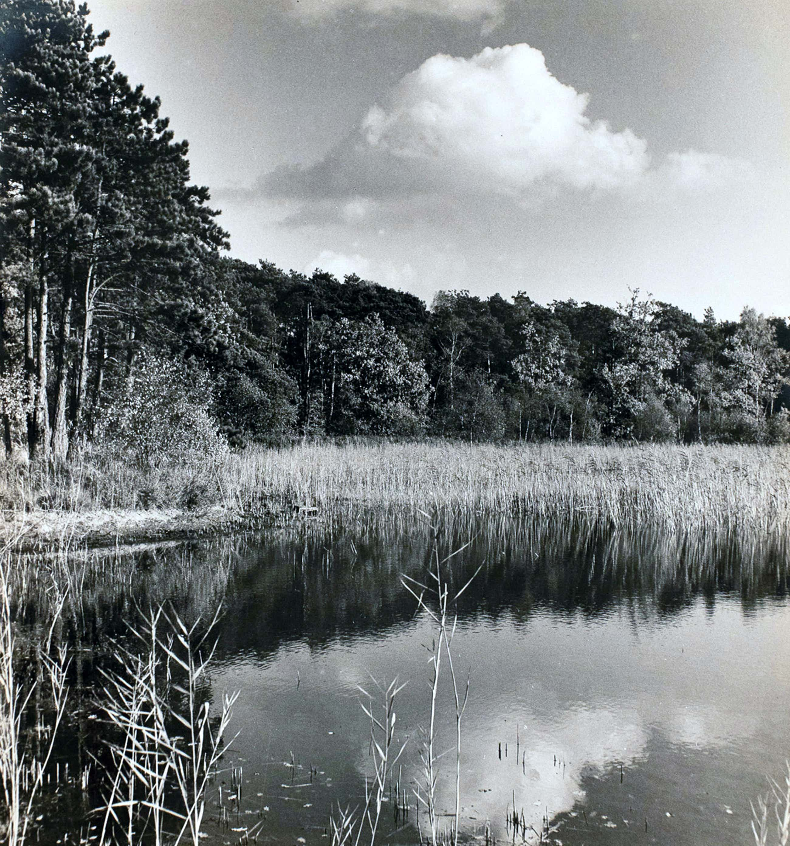 Cas Oorthuys - Ven in Brabant - originele foto op bariet-fotopapier kopen? Bied vanaf 50!