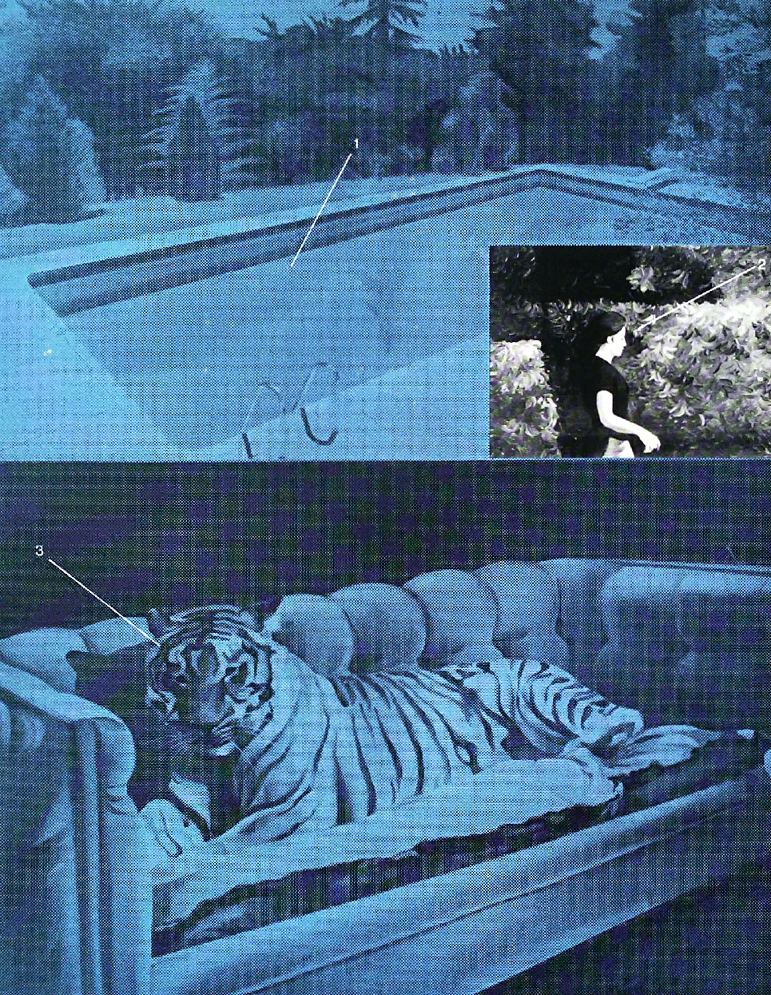 Jacques Monory - Tigre sur fond bleu, zeefdruk kopen? Bied vanaf 30!