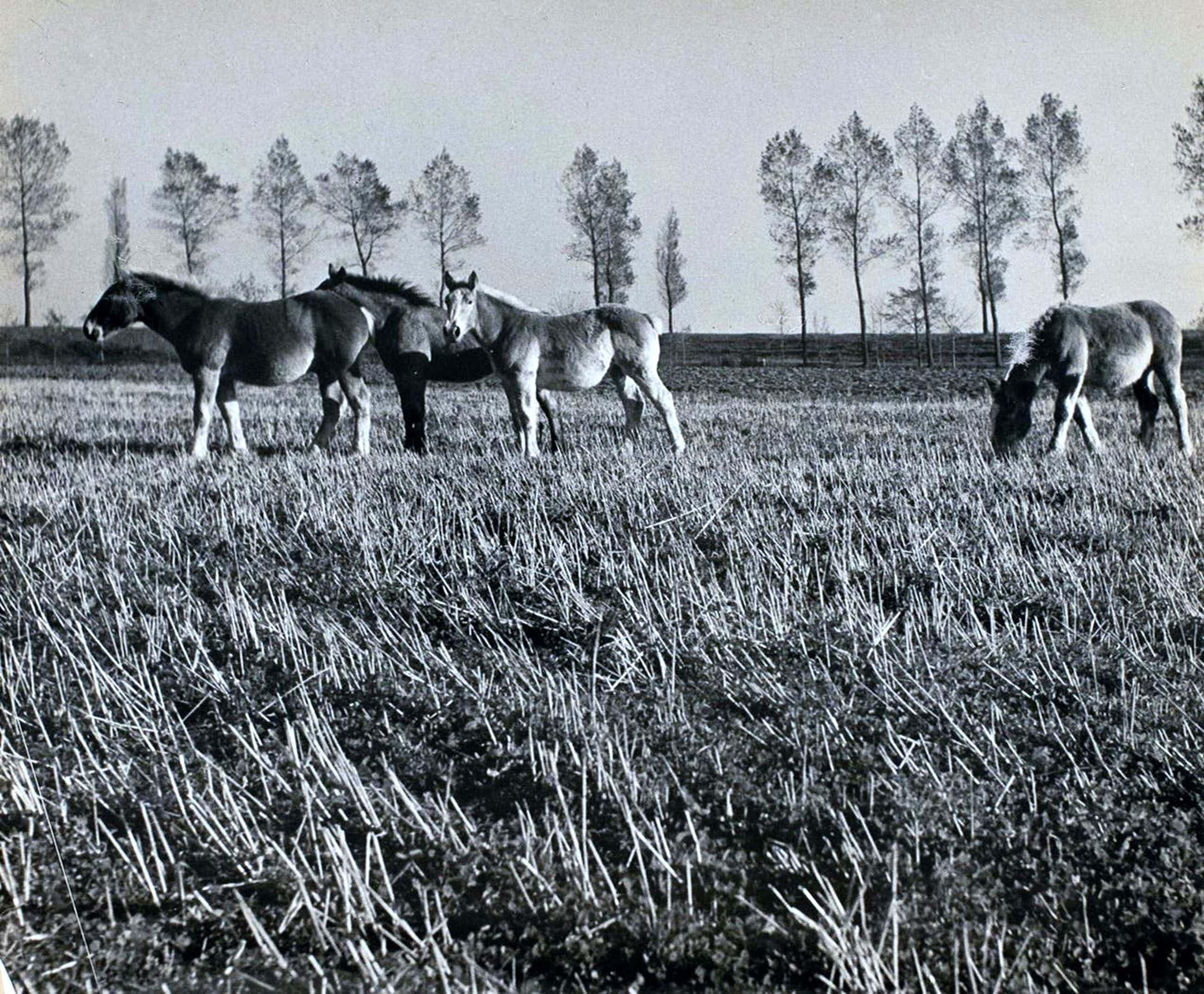 Cas Oorthuys - Zeeuws Vlaanderen - originele foto op bariet-fotopapier - 21473 kopen? Bied vanaf 60!