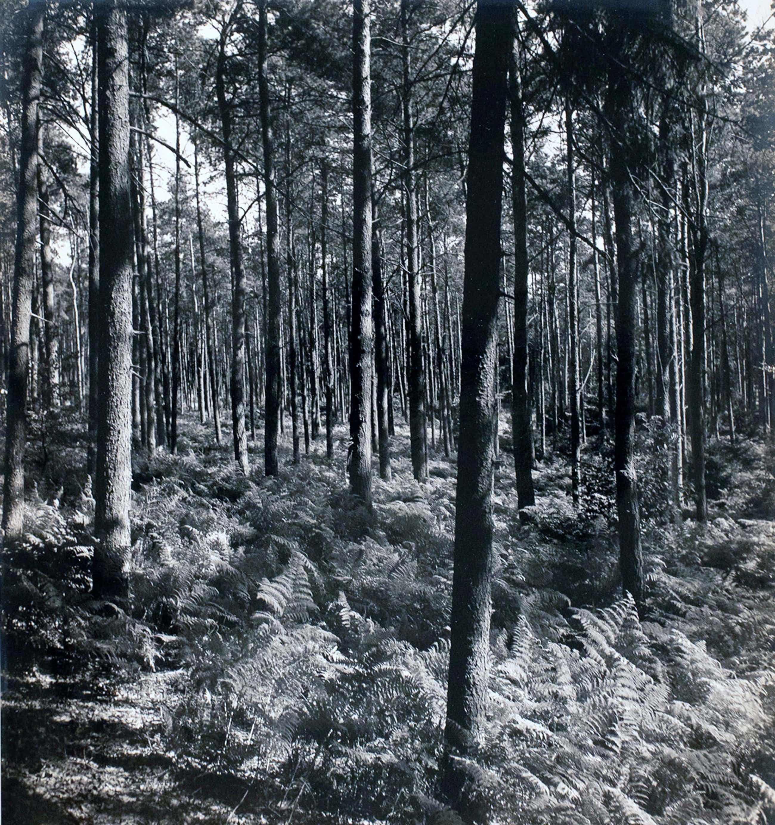 Cas Oorthuys - Montferland - originele foto op bariet-fotopapier kopen? Bied vanaf 60!