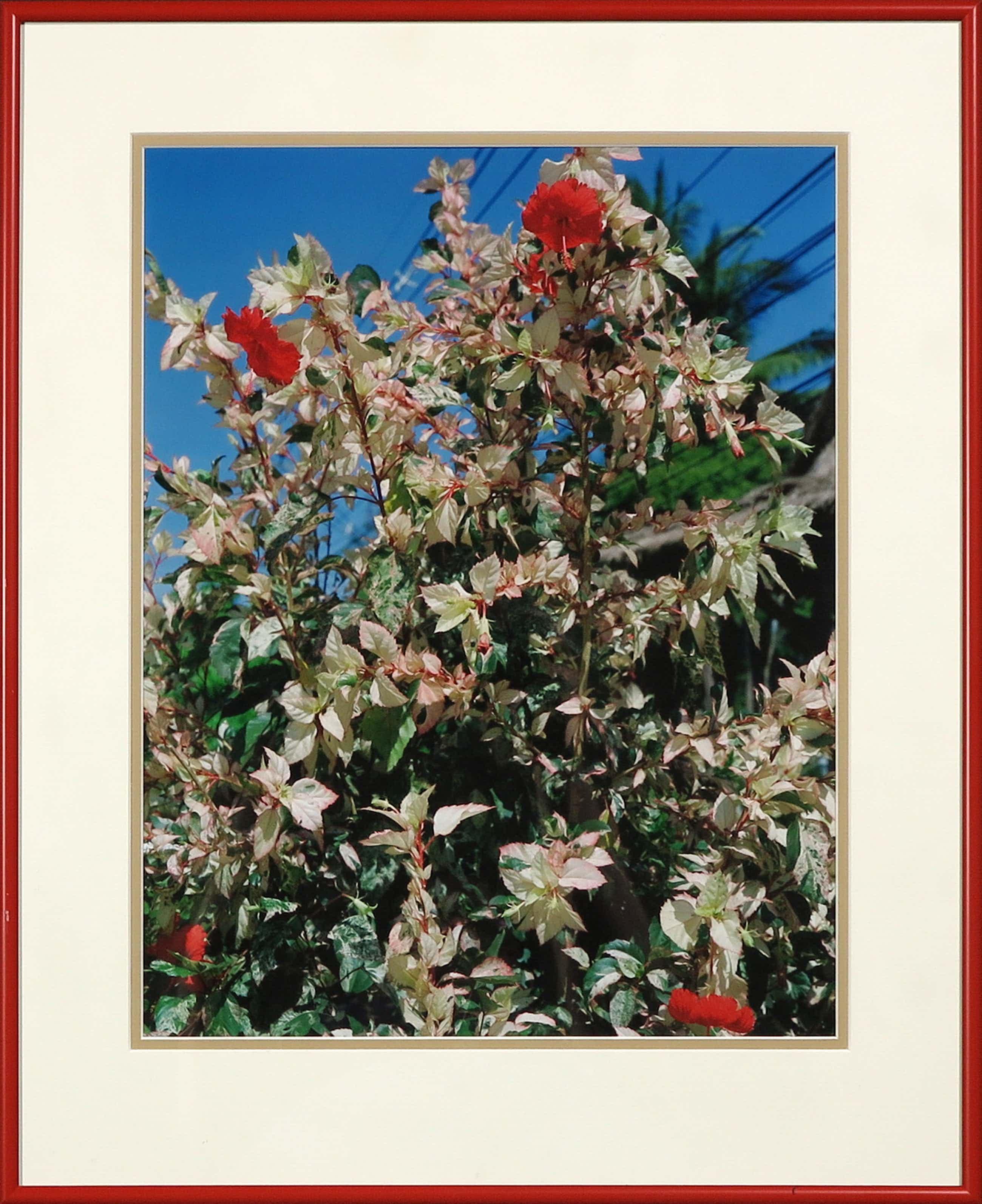 Marnix Goossens - Foto, Hibiscus - Ingelijst + gesigneerde tentoonstellingscatalogus kopen? Bied vanaf 270!