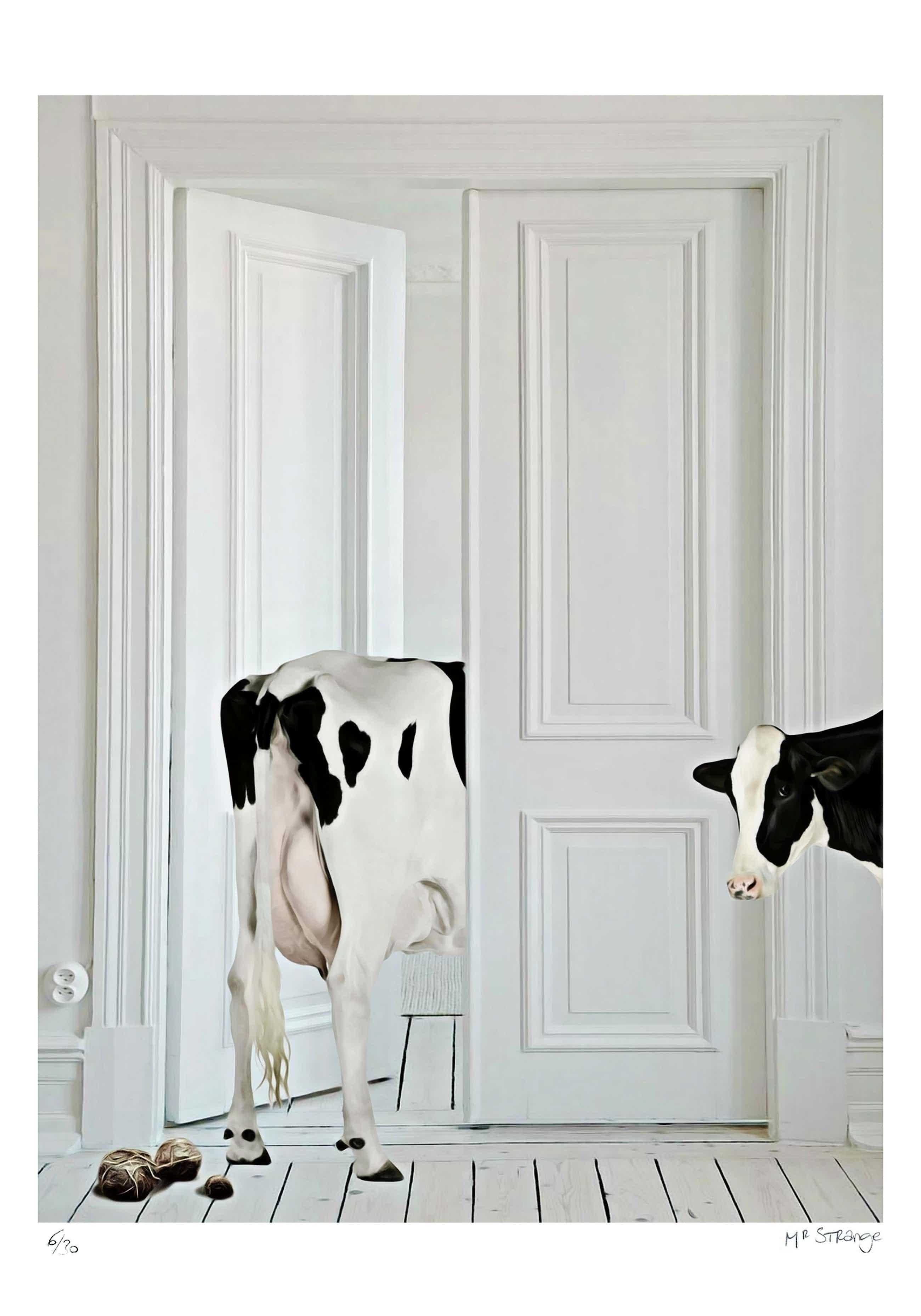 Mr. Strange - Vaches d'appartement kopen? Bied vanaf 80!