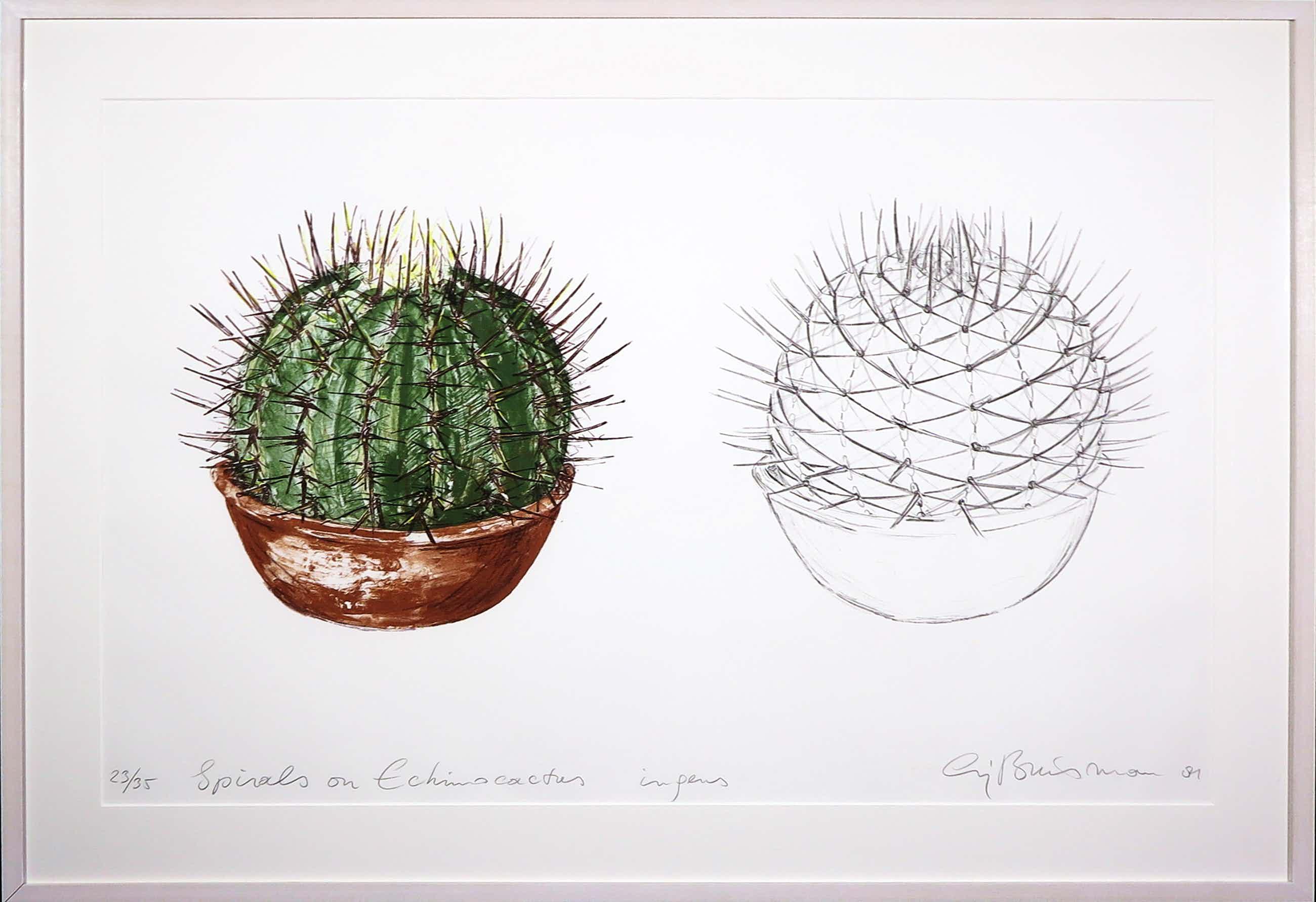 Sjoerd Buisman - Litho, Cactus - Ingelijst (Groot) kopen? Bied vanaf 150!