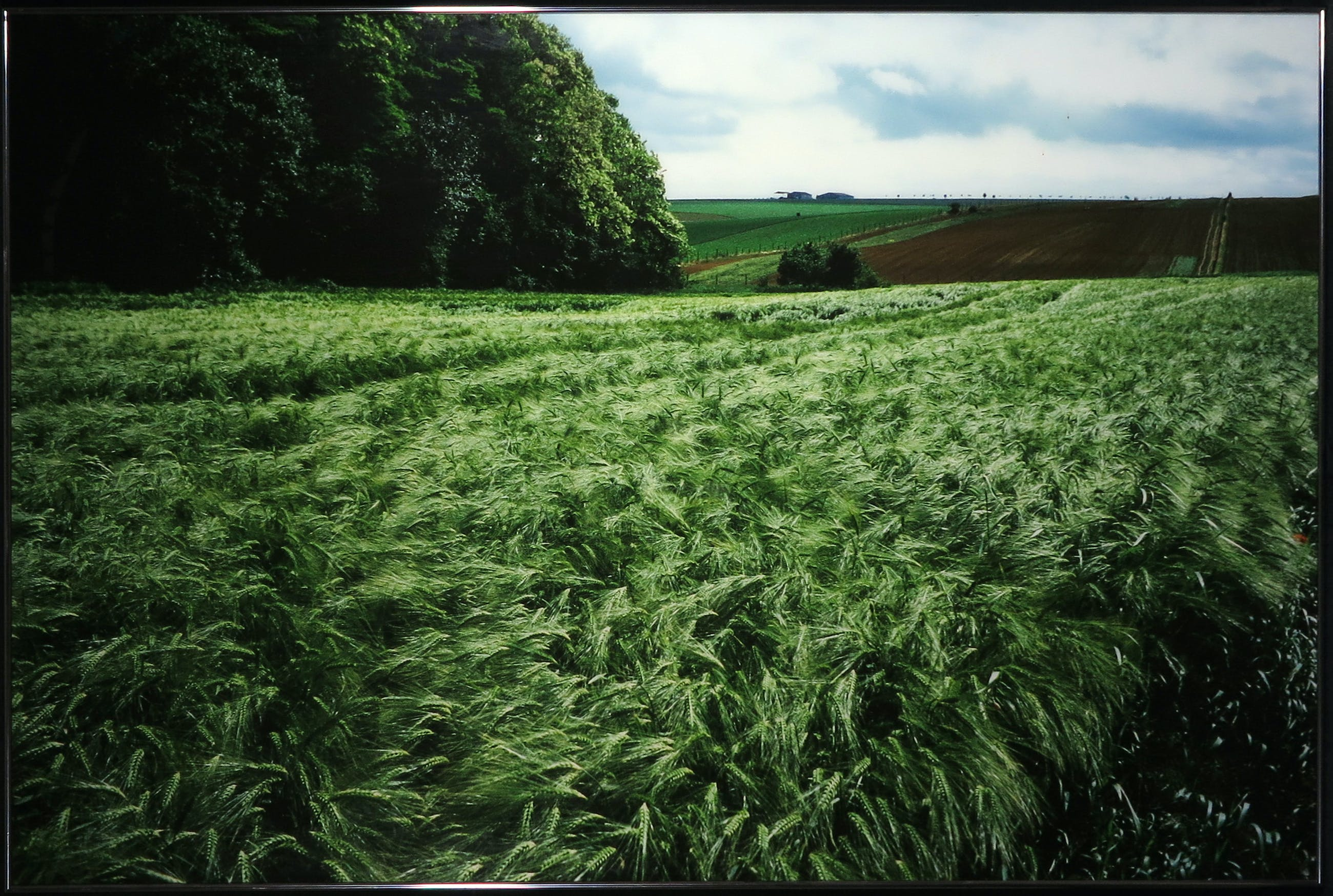 Paul Huf - C-Print, Landbouw - Ingelijst (Zeer groot) kopen? Bied vanaf 1!