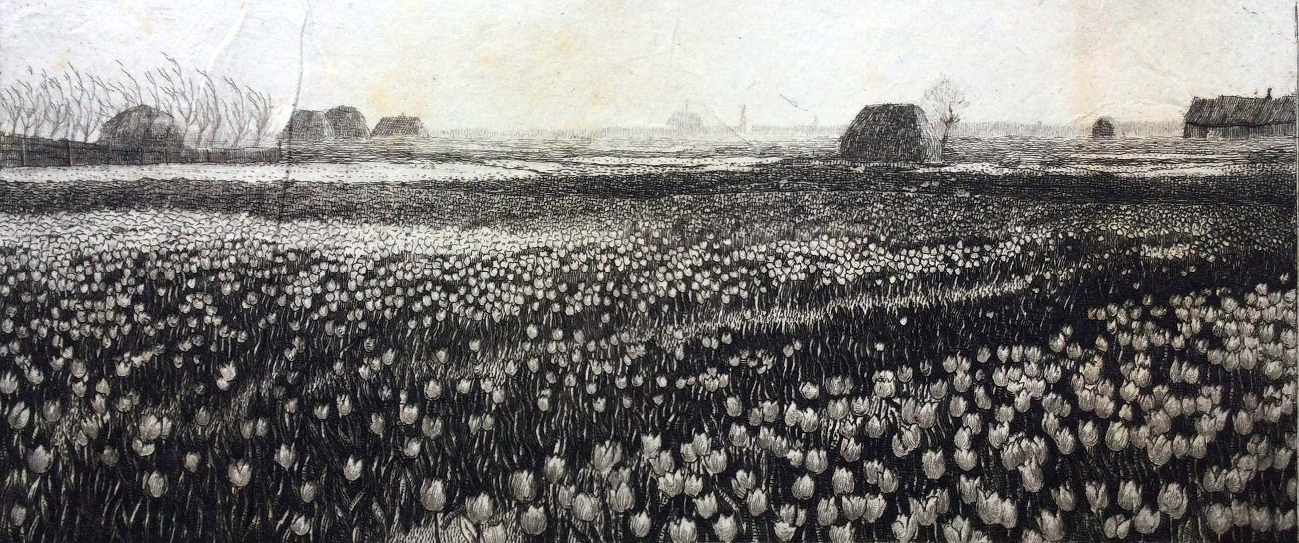 Johannes Graadt van Roggen - C5033-22, Tulpenheide Haarlem kopen? Bied vanaf 150!