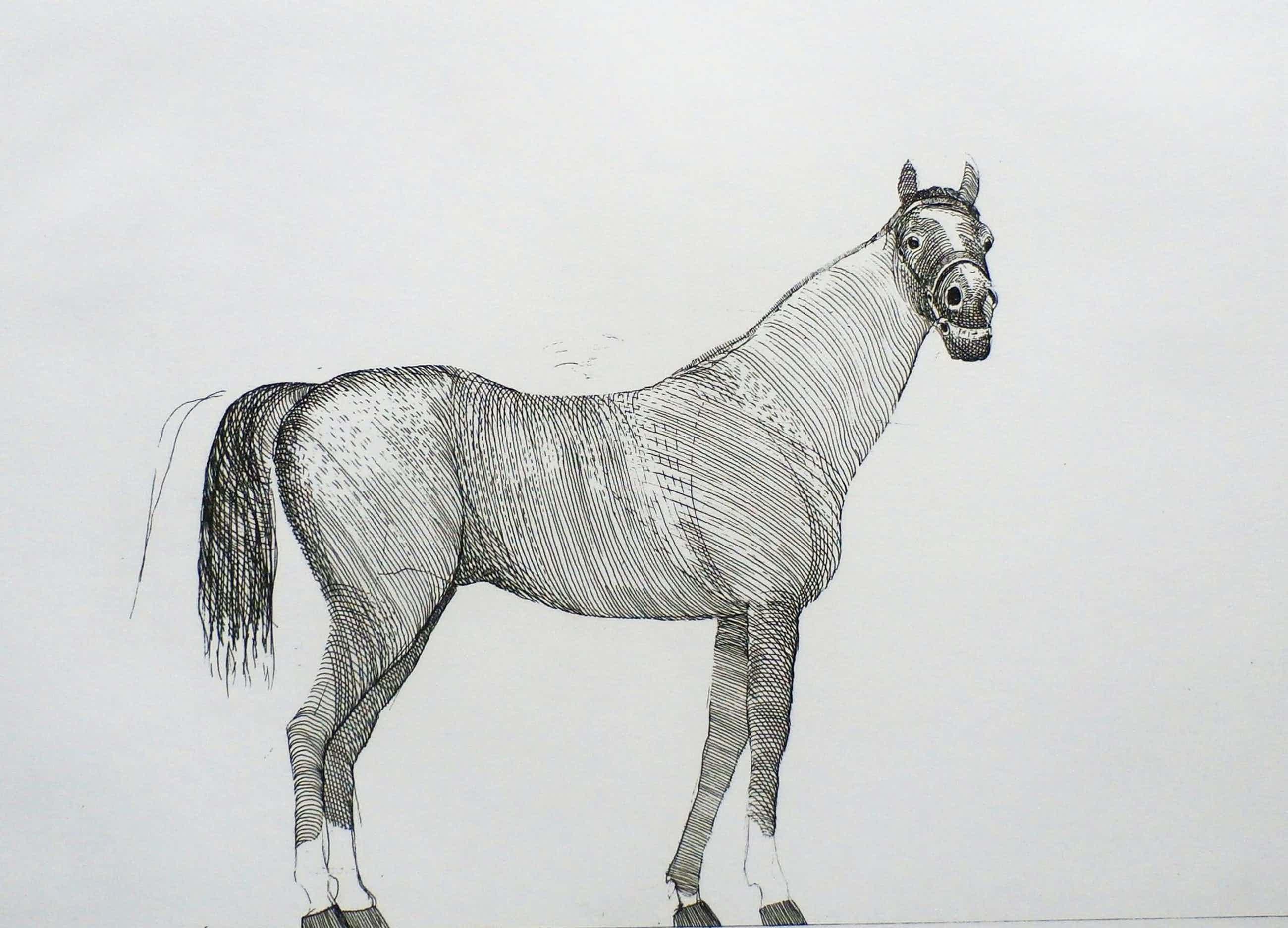 Aat Verhoog - paard - 1971 kopen? Bied vanaf 50!