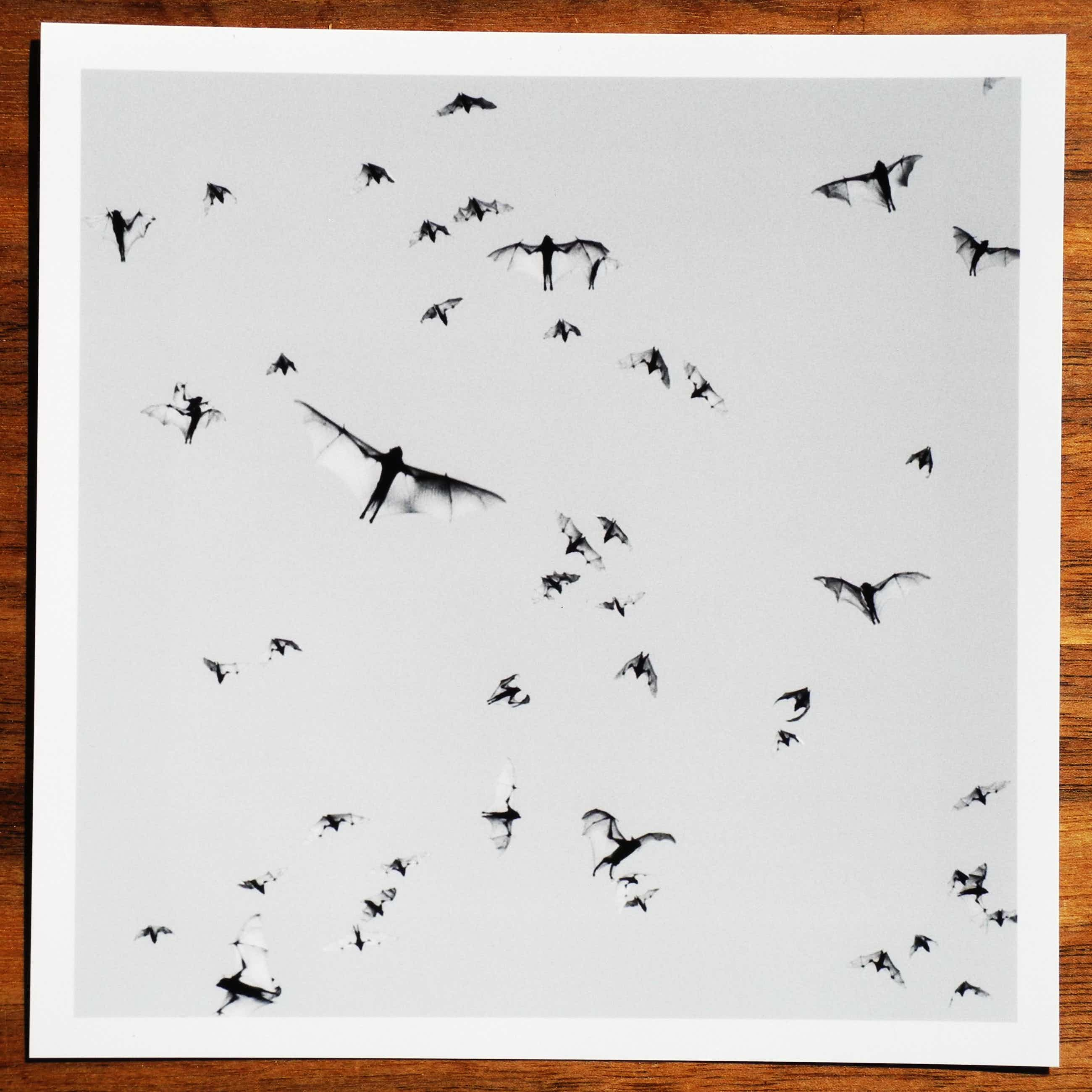Trent Parke - Flying Foxes. Mataranka, Australia. 2004. From the project Minutes To Midnight kopen? Bied vanaf 300!