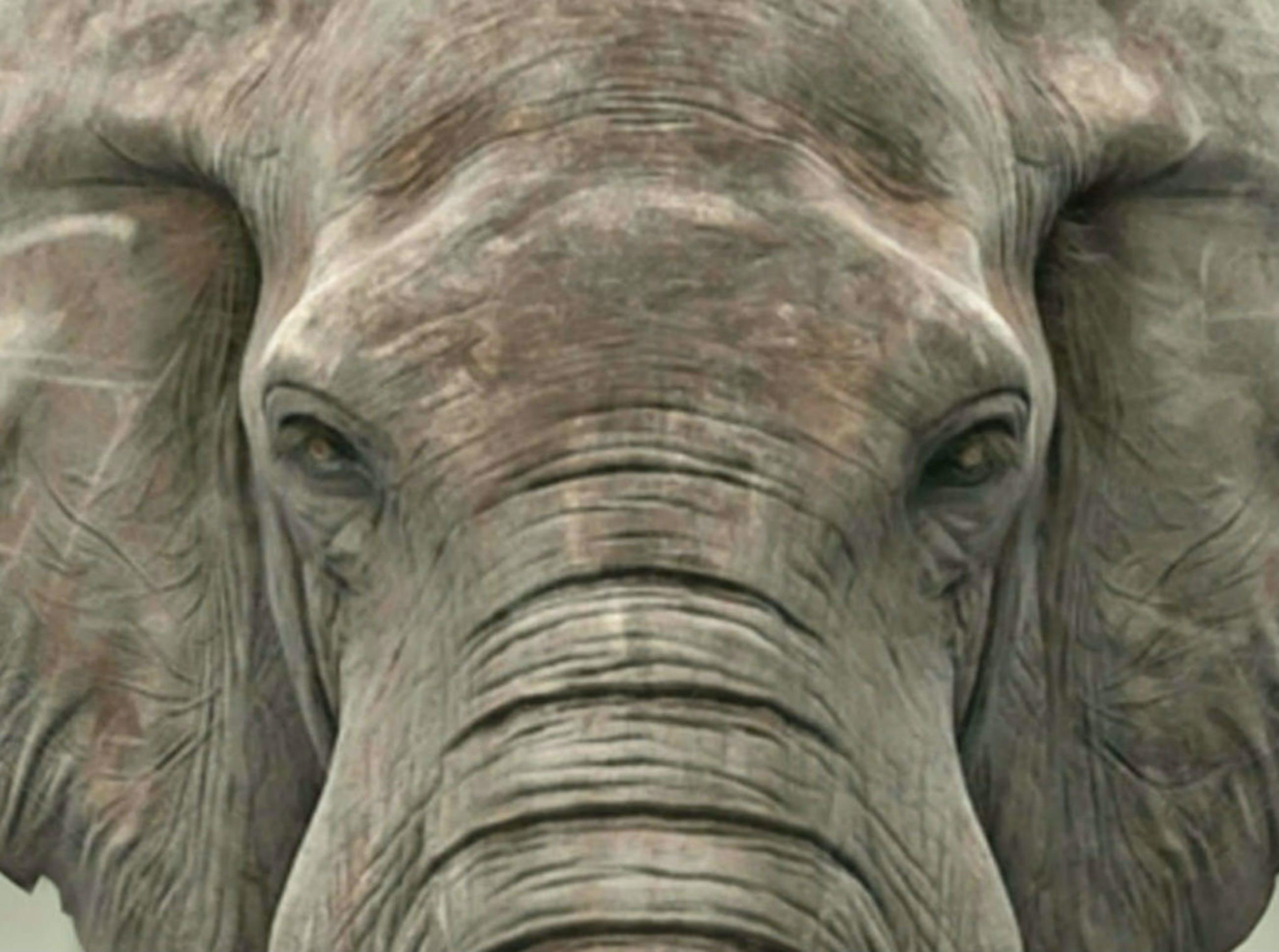 Mr. Strange - LE DERNIER ELEPHANT kopen? Bied vanaf 50!