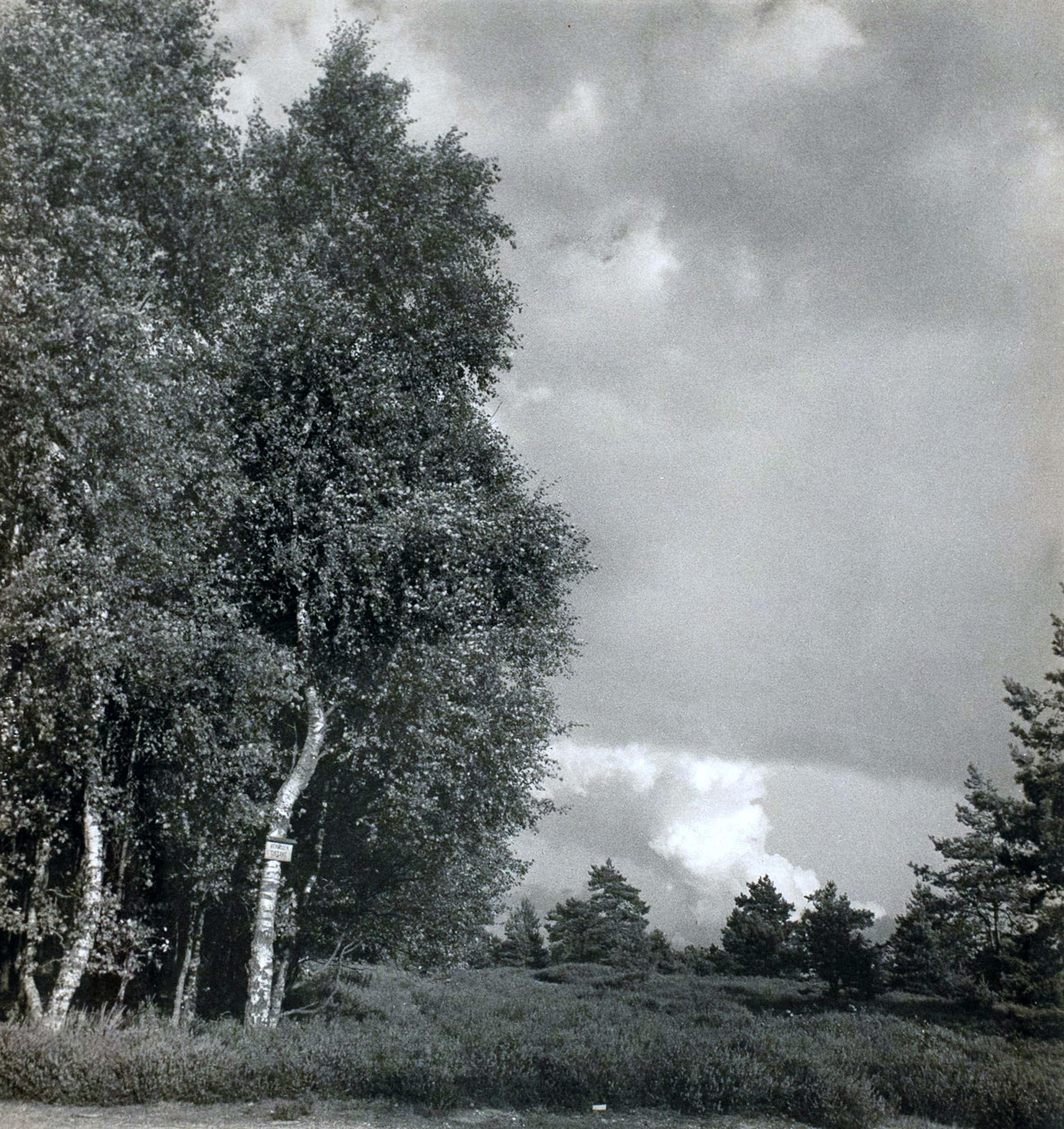 Cas Oorthuys - Op de Holterberg - originele foto op bariet-fotopapier kopen? Bied vanaf 60!