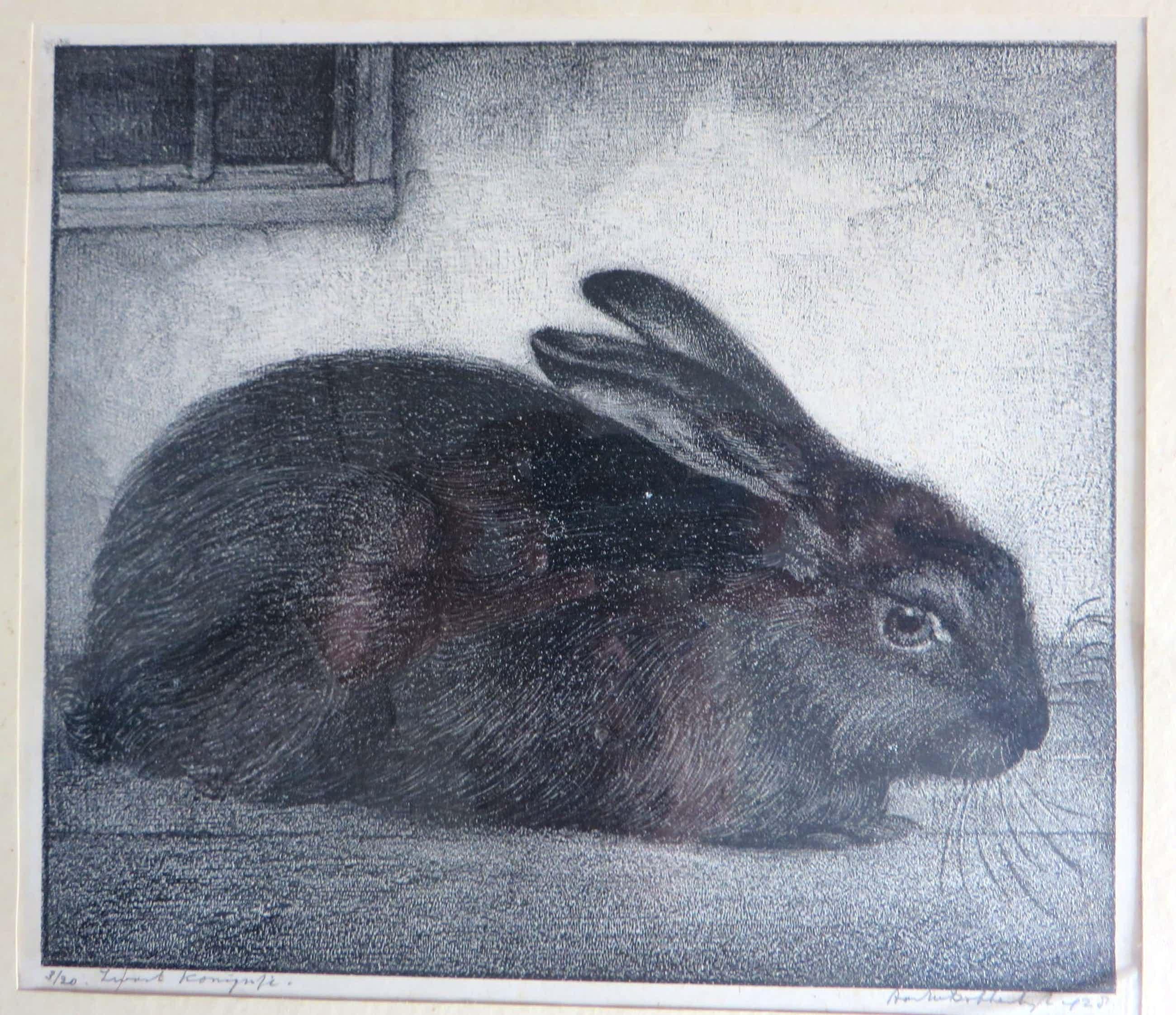 Aart van Dobbenburgh - Zwart konijn kopen? Bied vanaf 60!