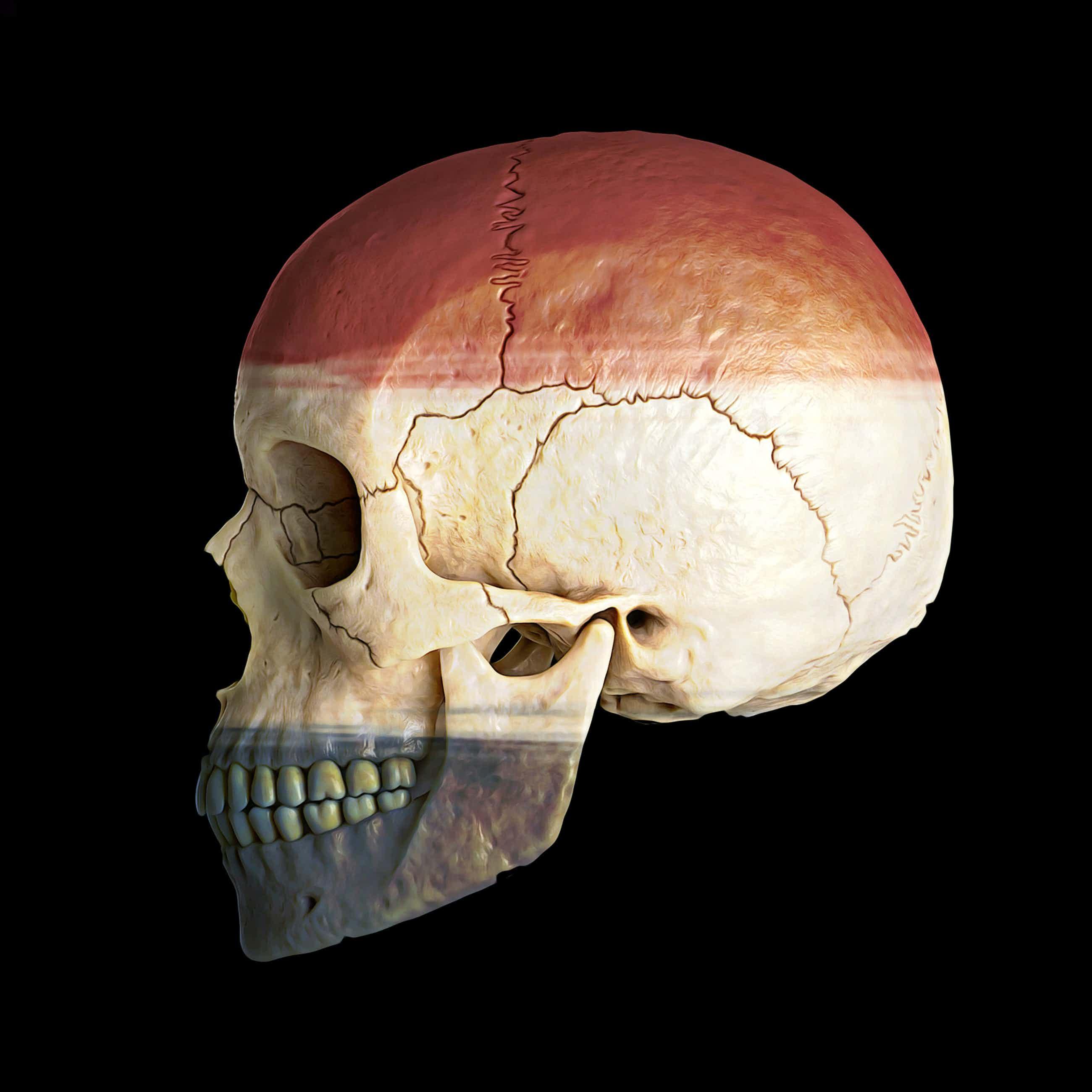 Mr. Strange - Netherlands Skull kopen? Bied vanaf 35!
