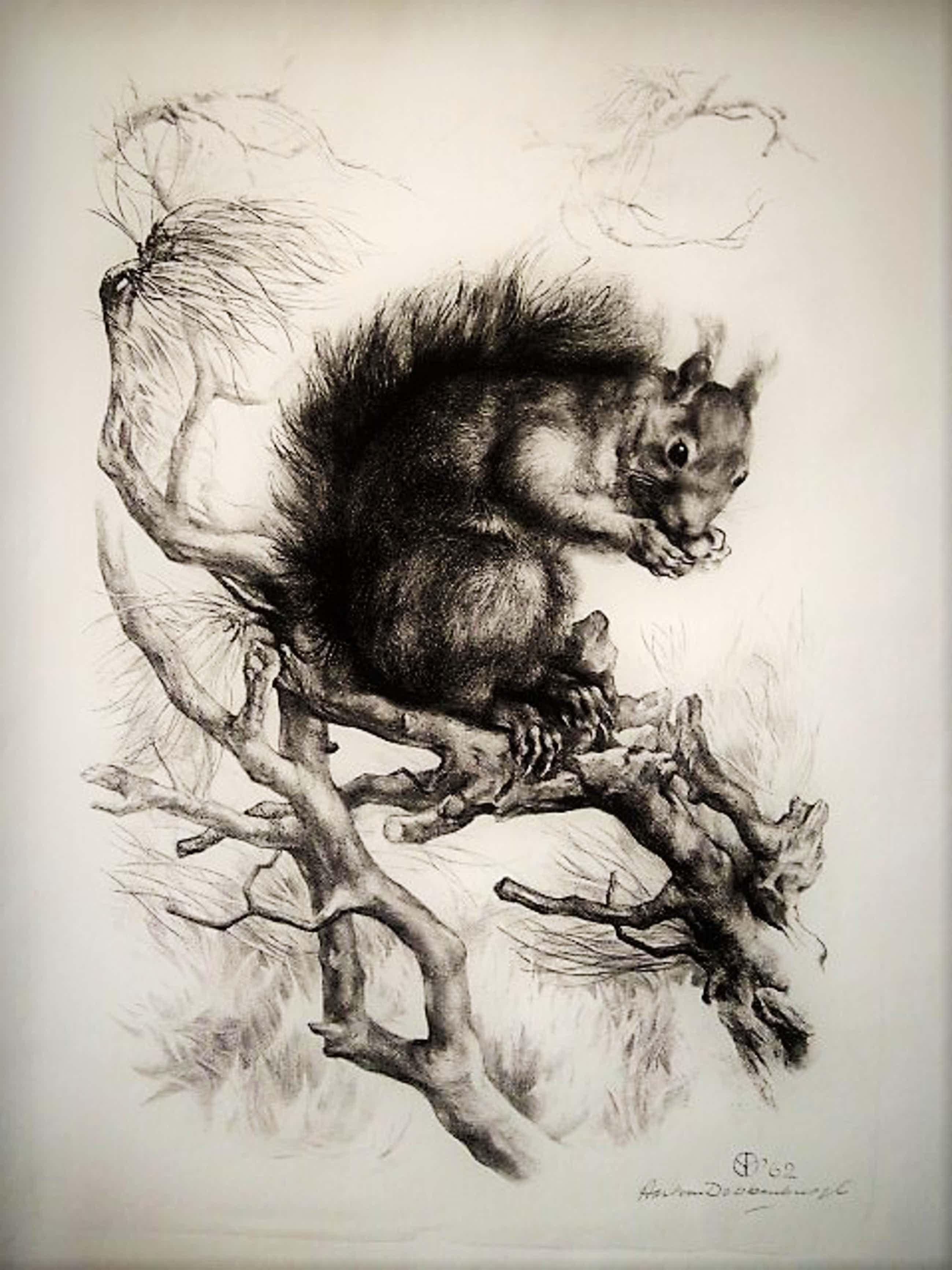 """Aart van Dobbenburgh - Groot realistisch Litho """"Eekhoorn op boomtak"""" gesigneerd 1962 kopen? Bied vanaf 91!"""