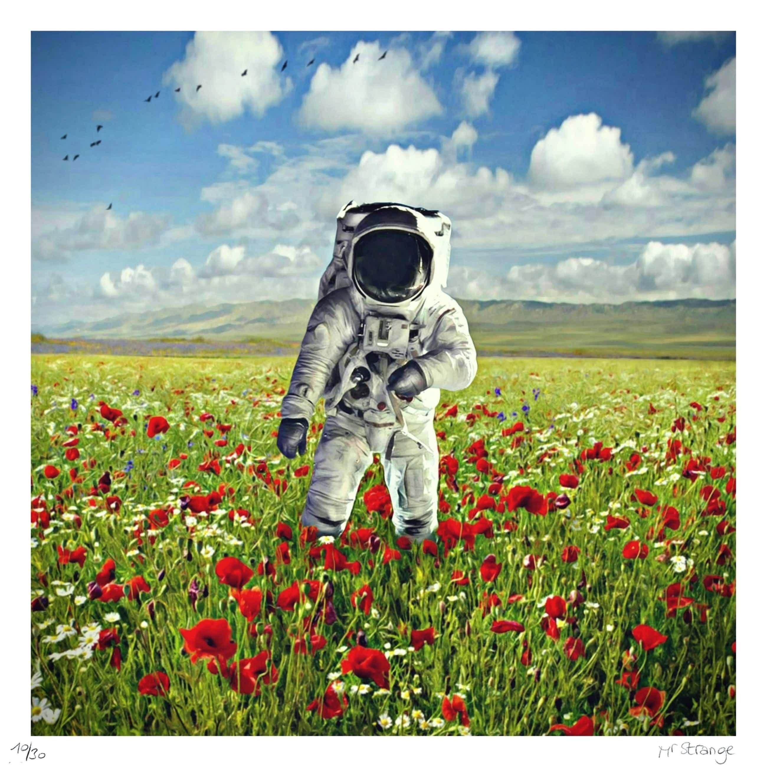 Mr. Strange - Champs de Fleurs sur la planète Terre kopen? Bied vanaf 60!