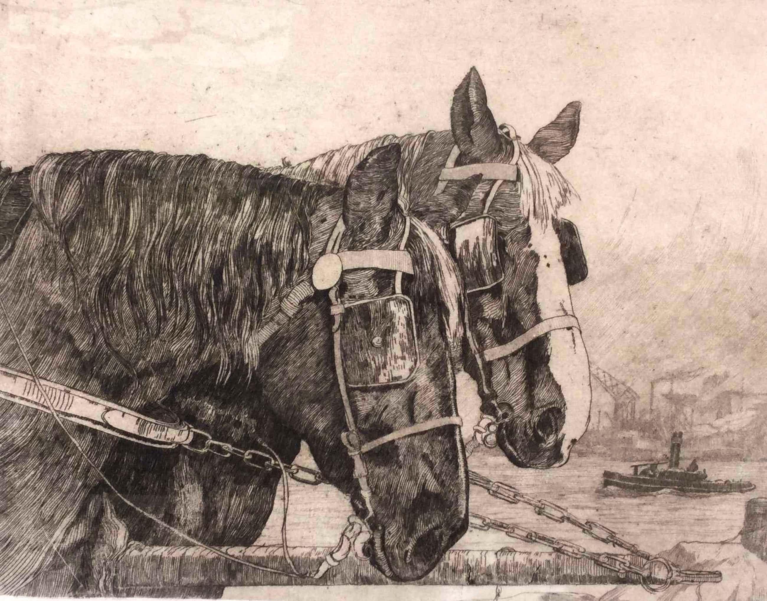 Jan Sirks - C459-3 - Paarden kopen? Bied vanaf 50!